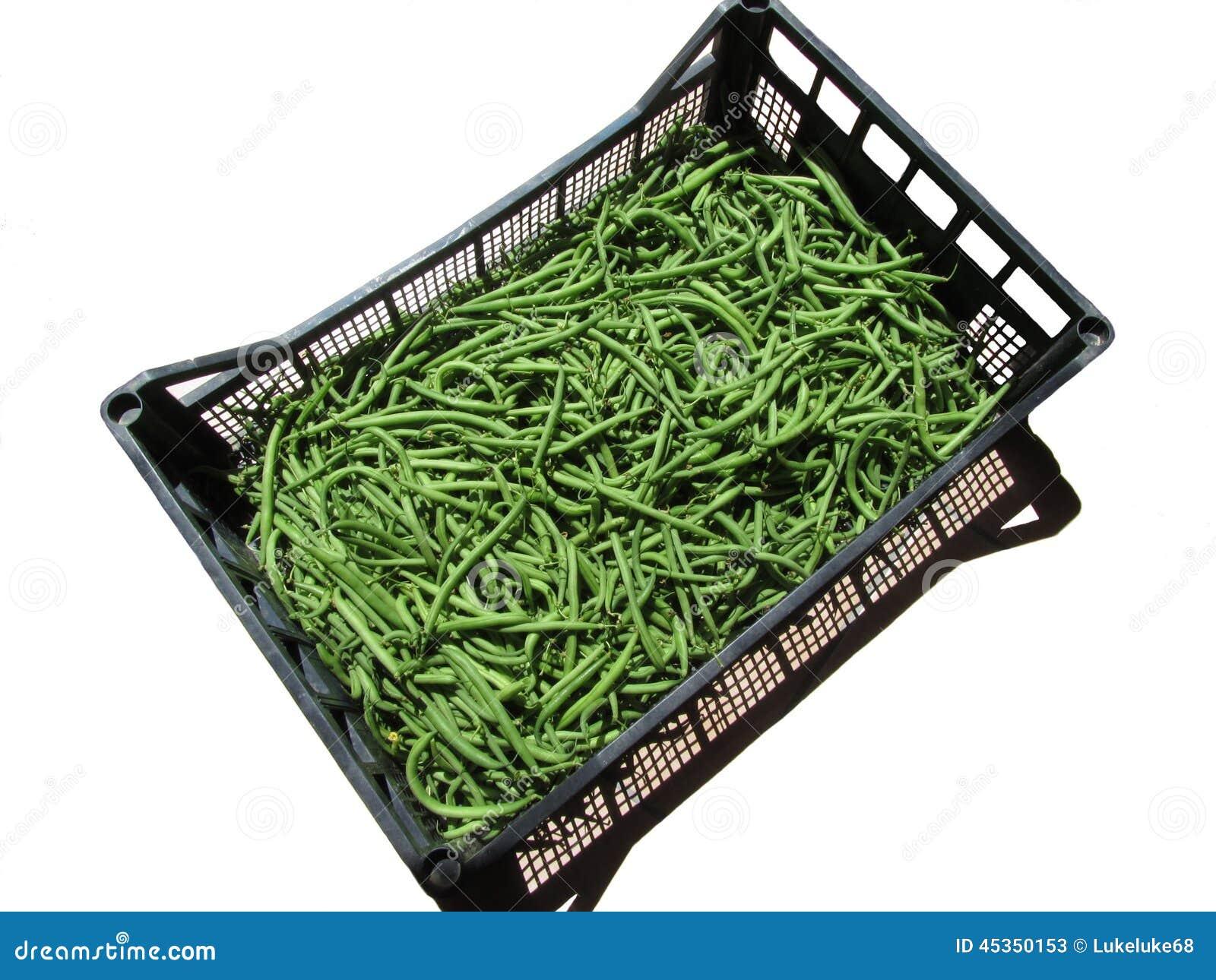 Haricots verts dans la boîte sur le fond blanc
