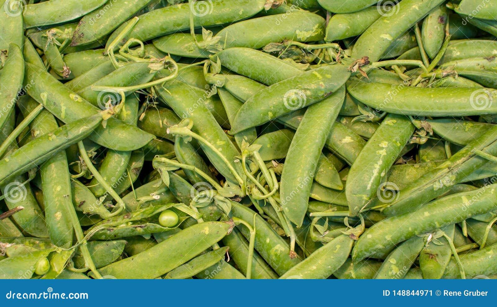 Haricots verts organiques sains sur le marché