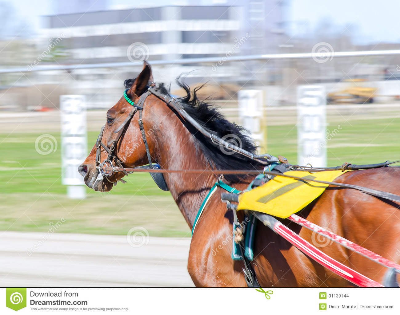 Harness racing betting terms defined binary options affiliates program