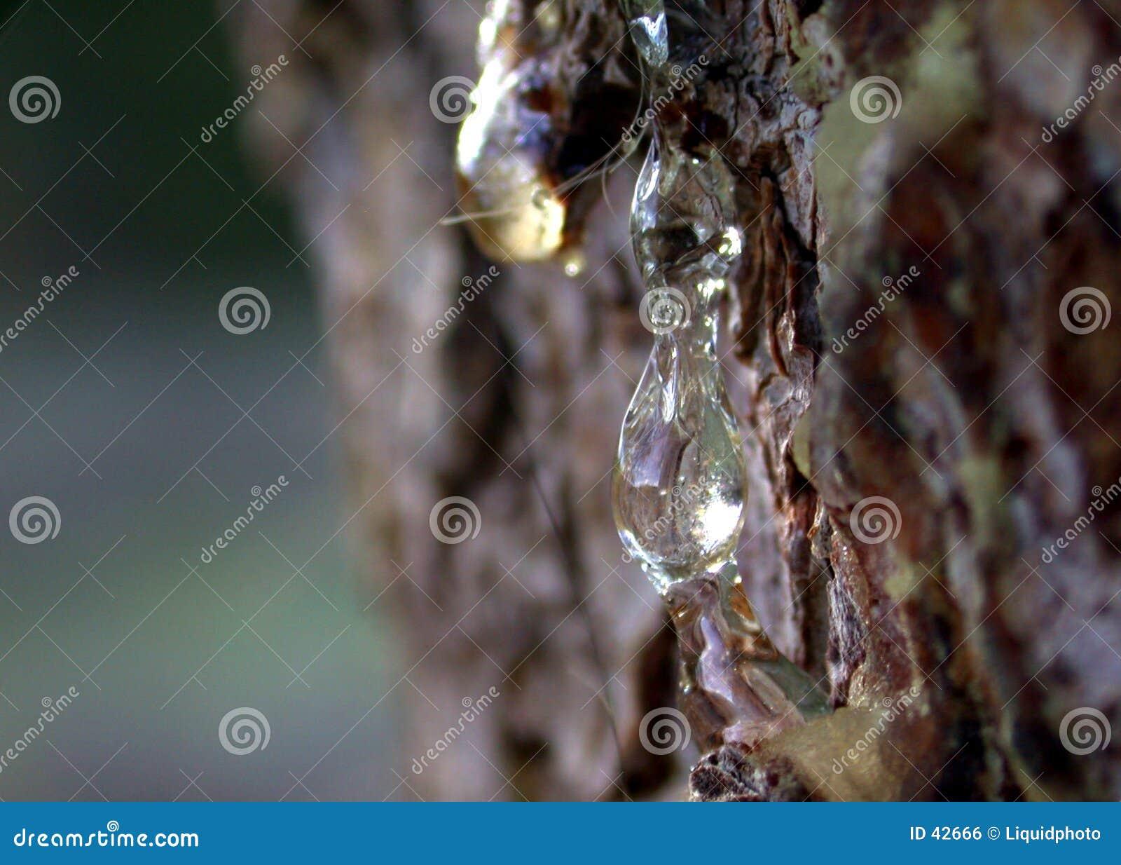 Hars 2 van de Hoogte van het Sap van de pijnboom