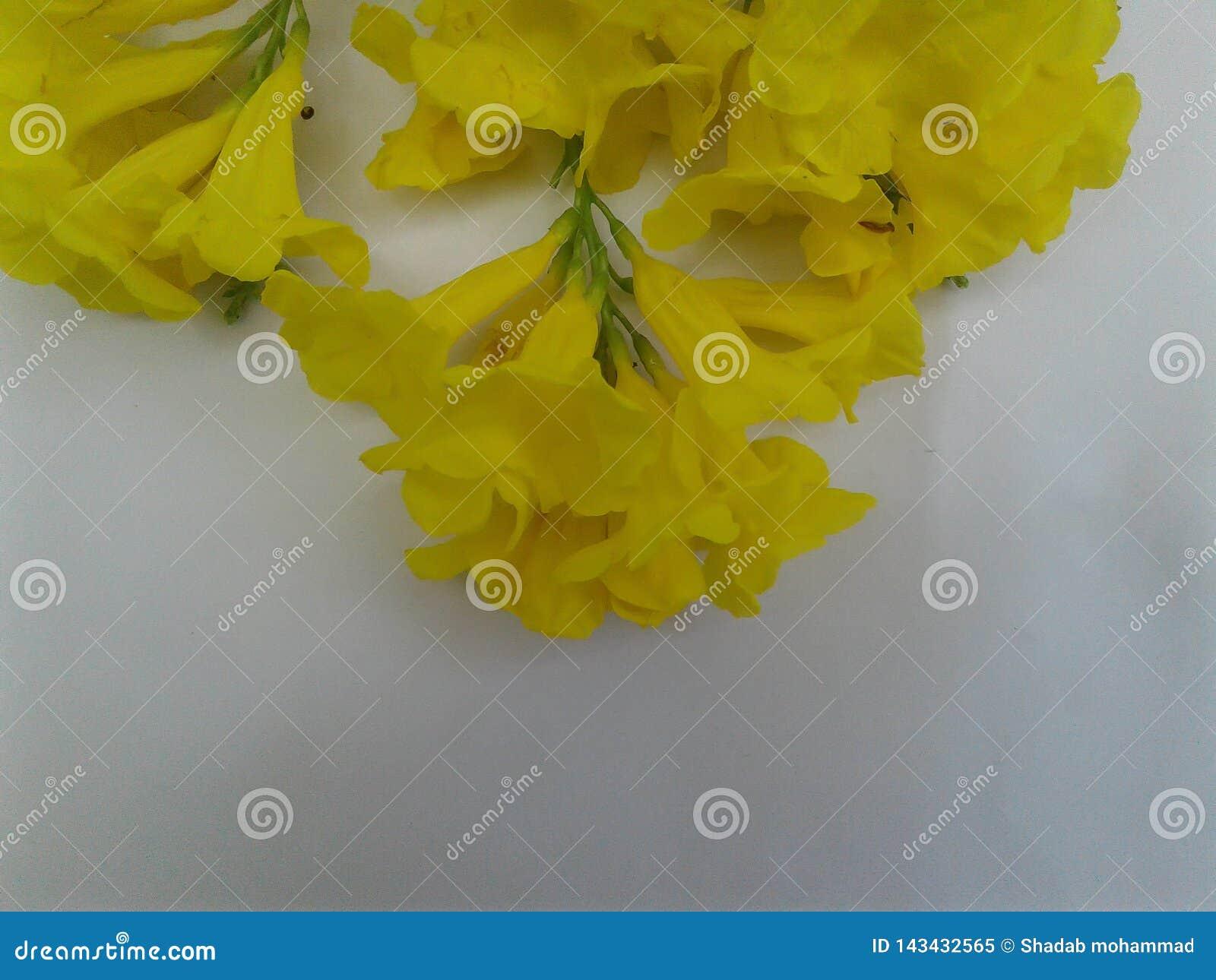 Hart wat betreft Mooie gele bloem