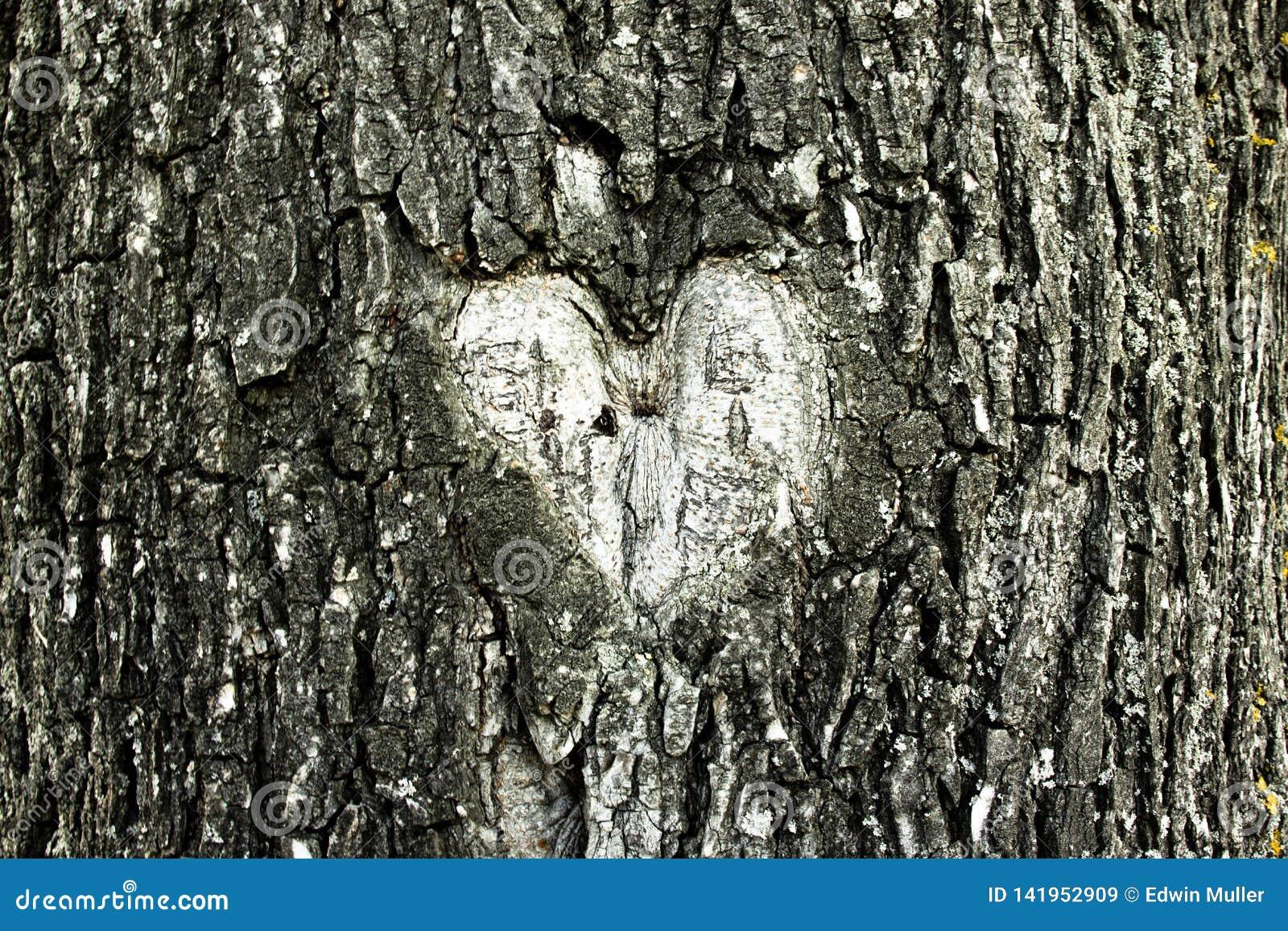 Hartvorm in een boomschors