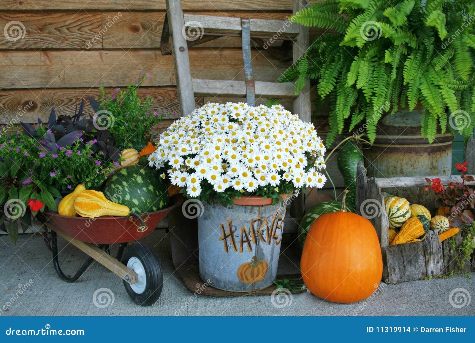 flowers gourds harvest - Harvest Decorations