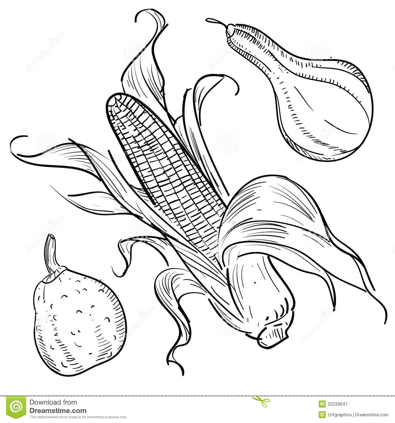 Harvest Illustrations Gourds And Corn Stock Vector