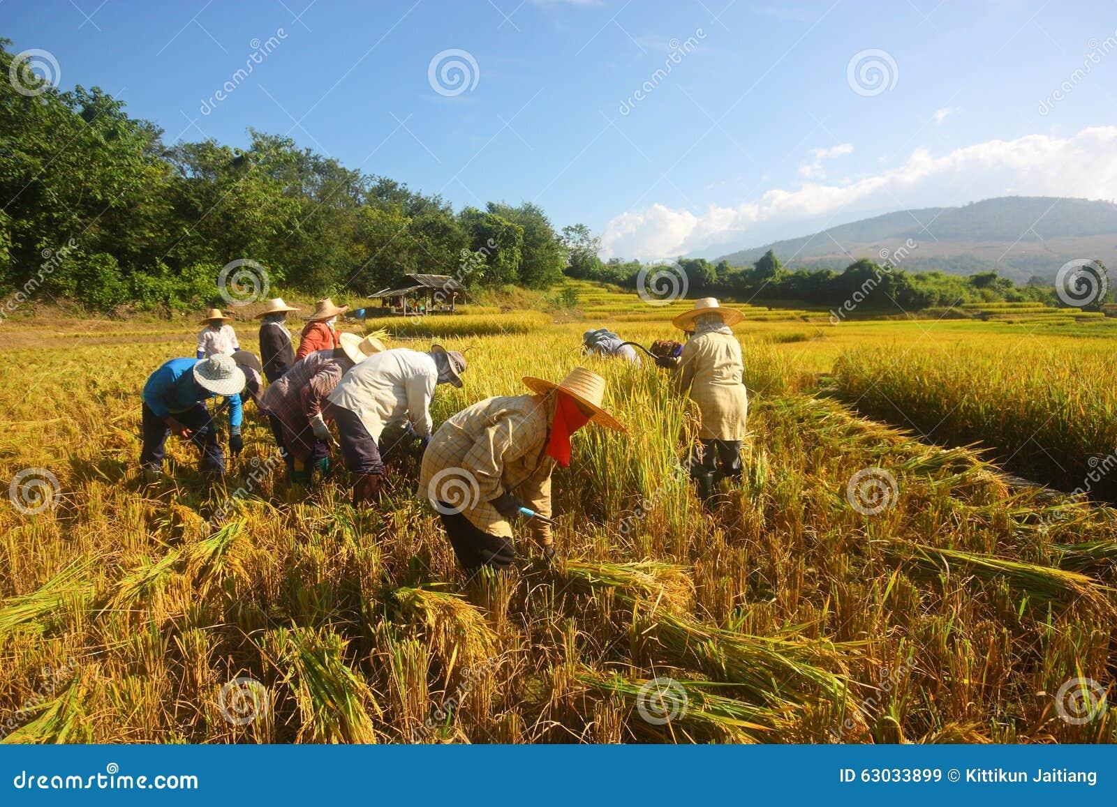 Harvest Season Stock P...