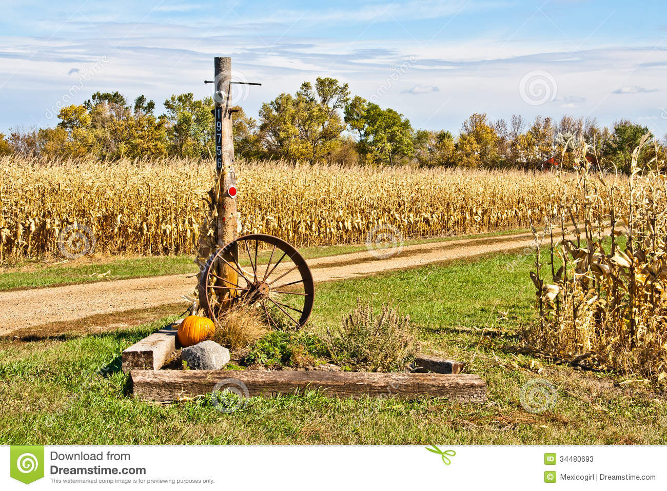 harvest time cornfield stock photos image 34480693 Hay Clip Art Corn Stalk Clip Art