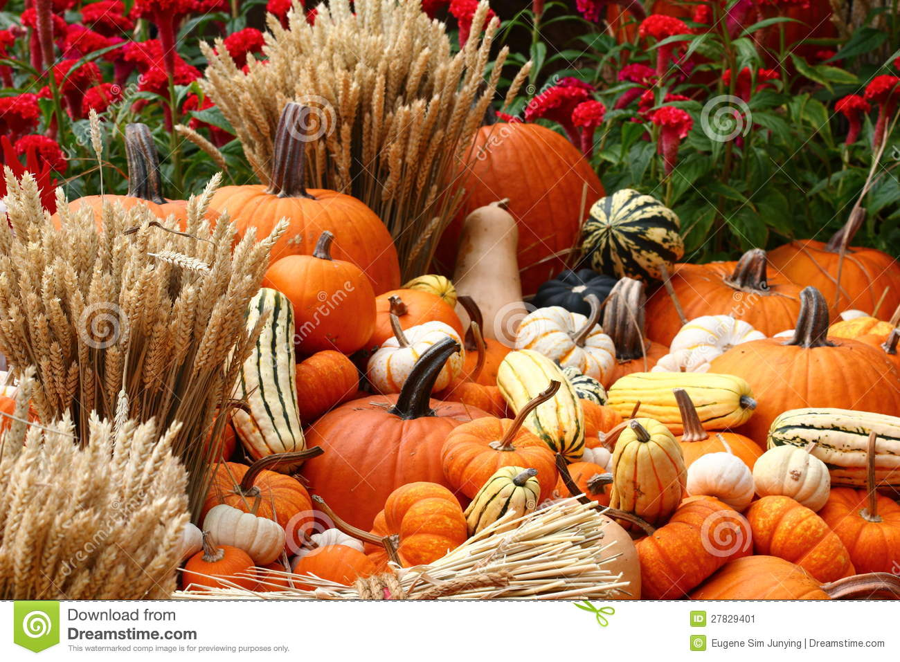 Harvest Time At Farm Stock Image Image 27829401