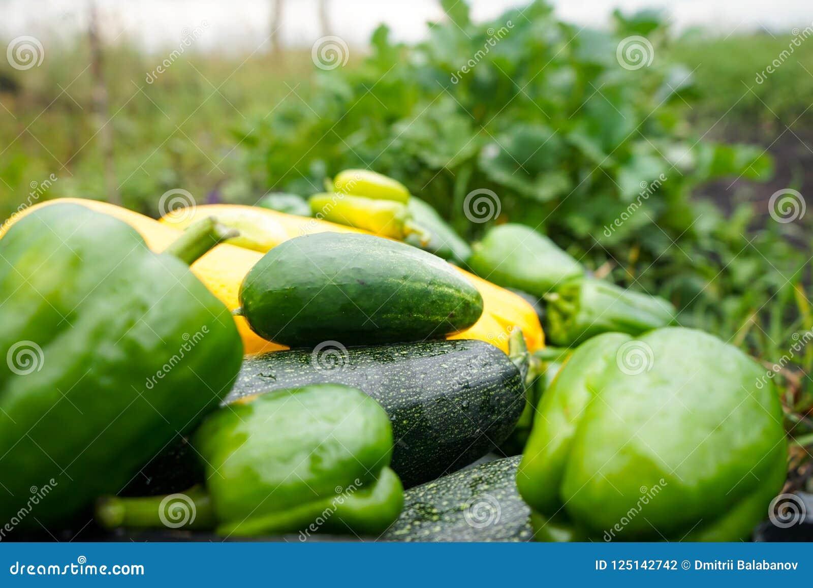 Veggie masturbation corn cucumber zucchini pictures