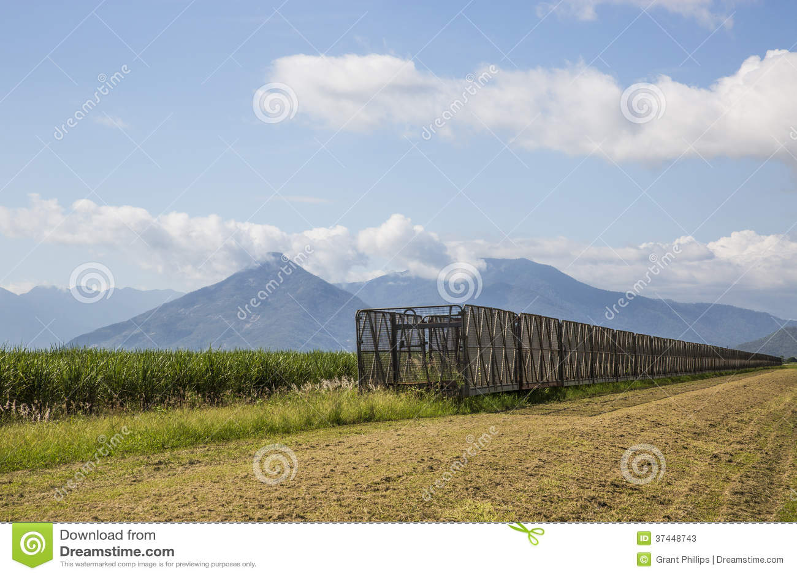 Harvesting Bins & Sugar Cane
