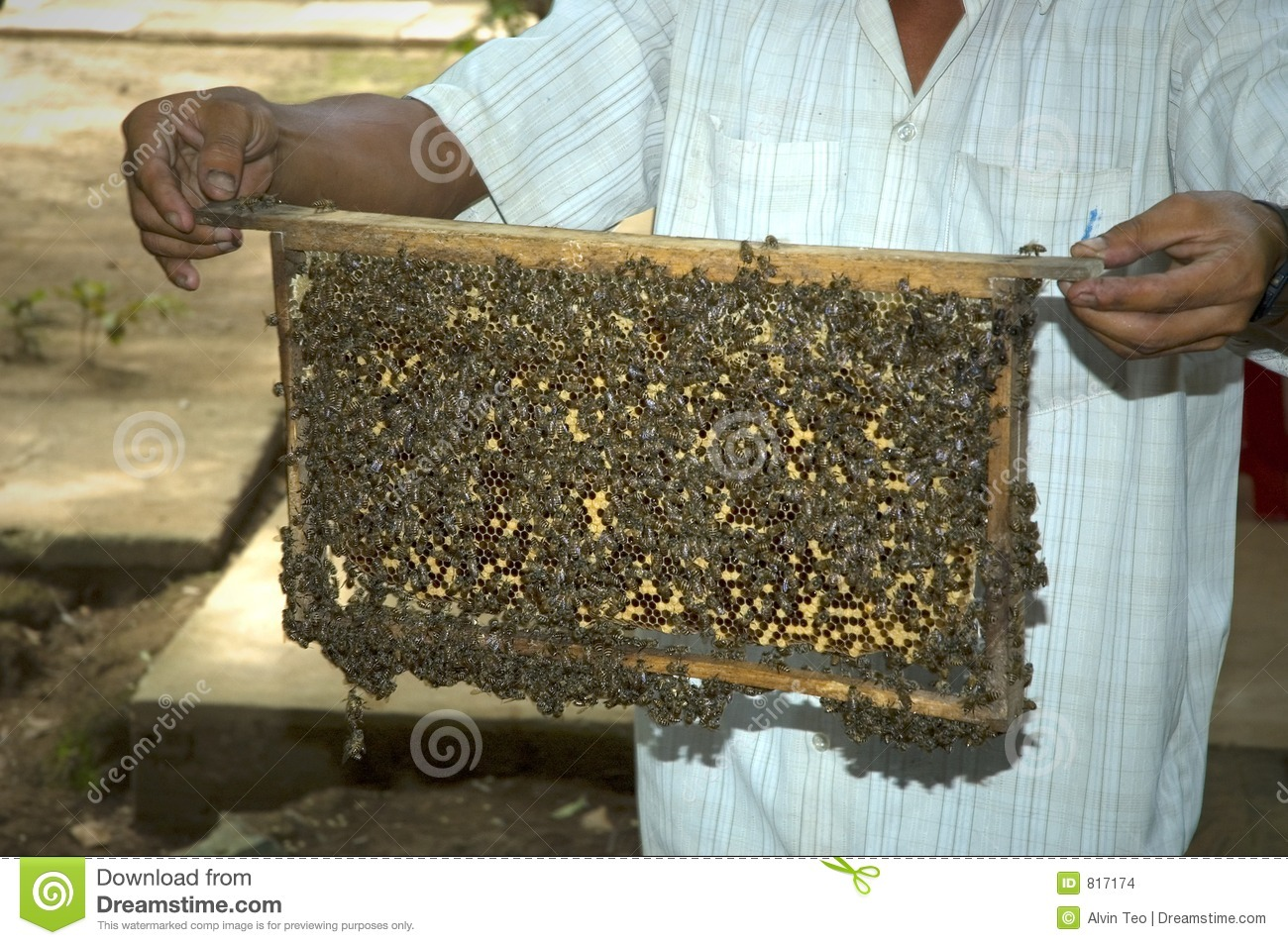 harvesting honey 817174