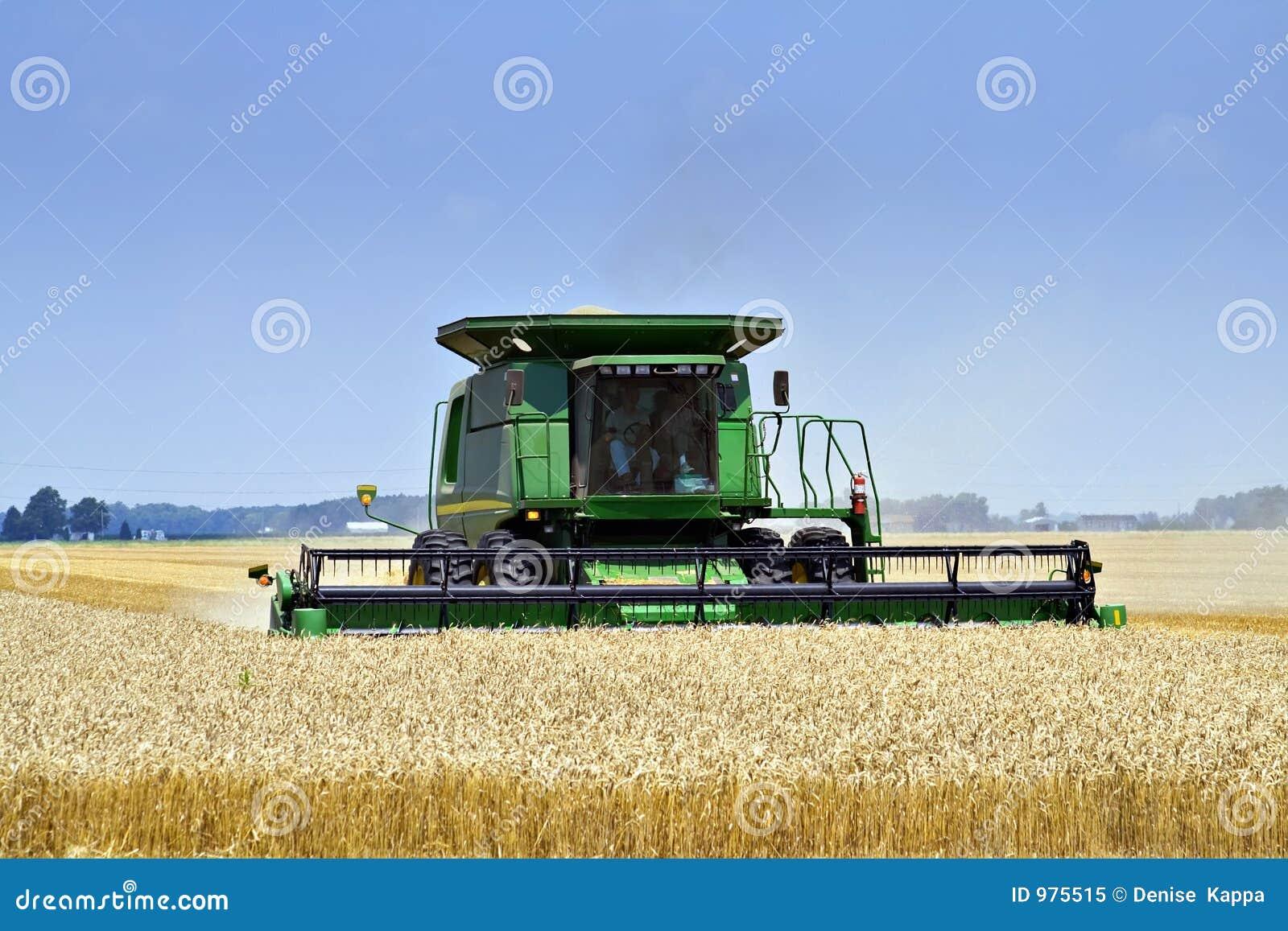 Harvesting Wheat-Toledo