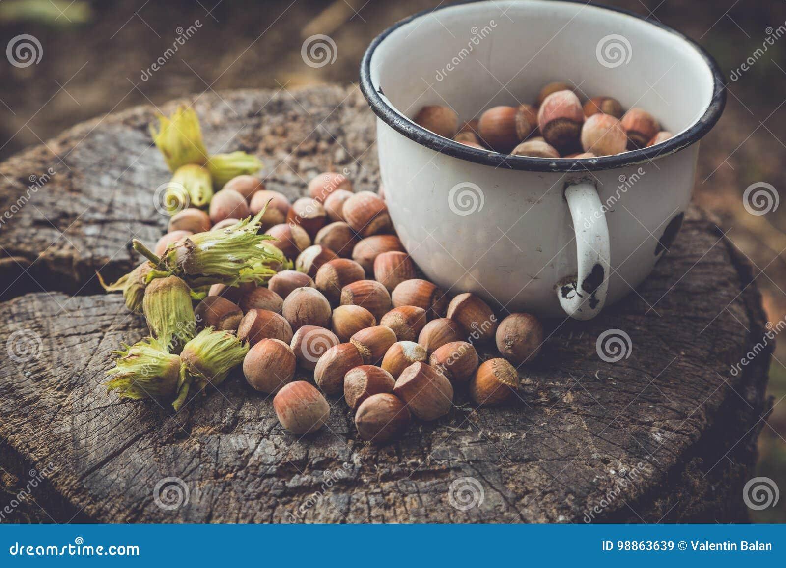 Hasselnötter