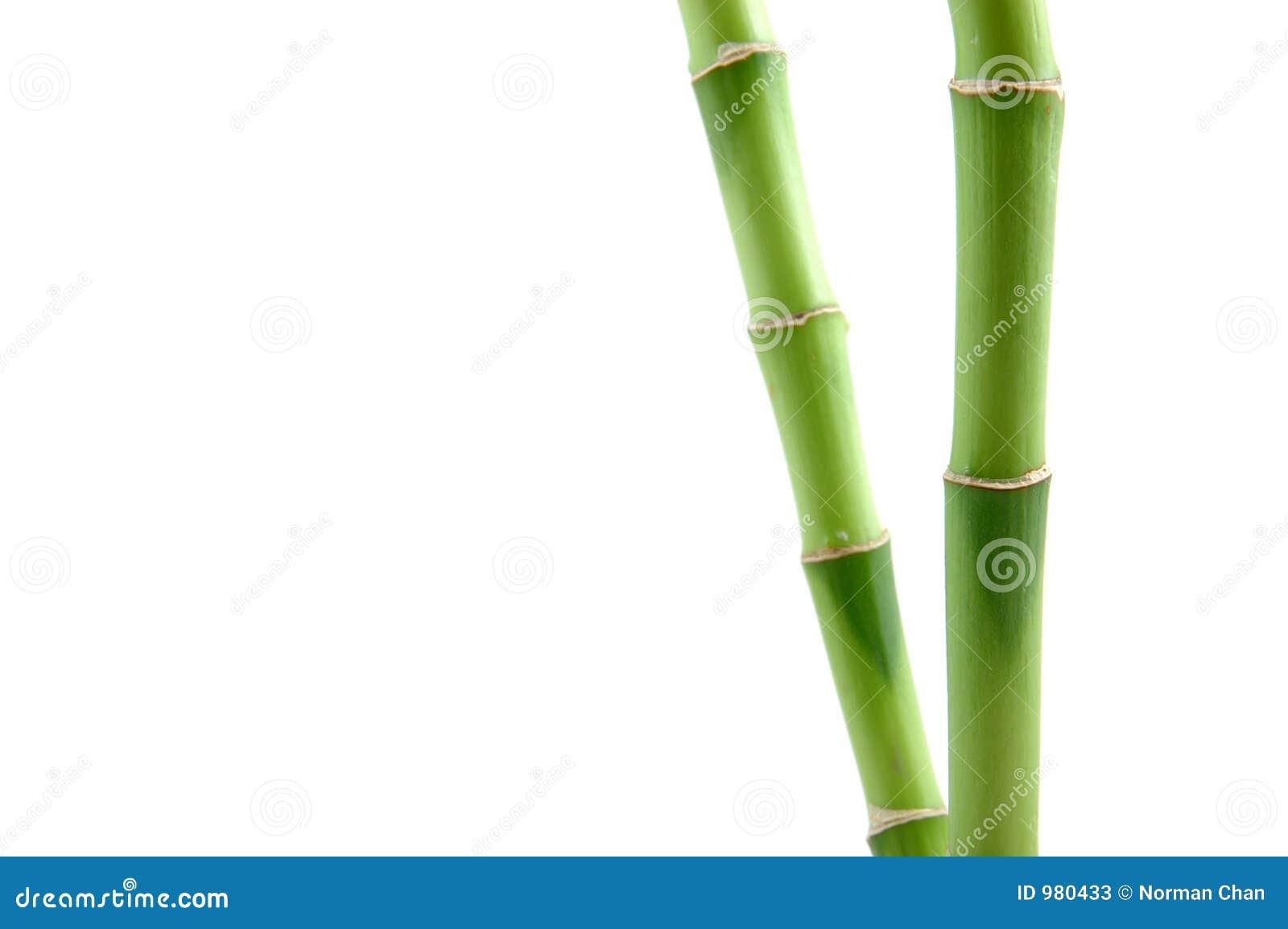 Hastes de bambu afortunadas