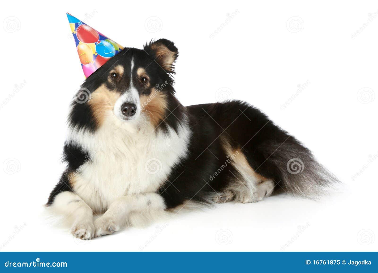 Hattdeltagaresheepdog shetland