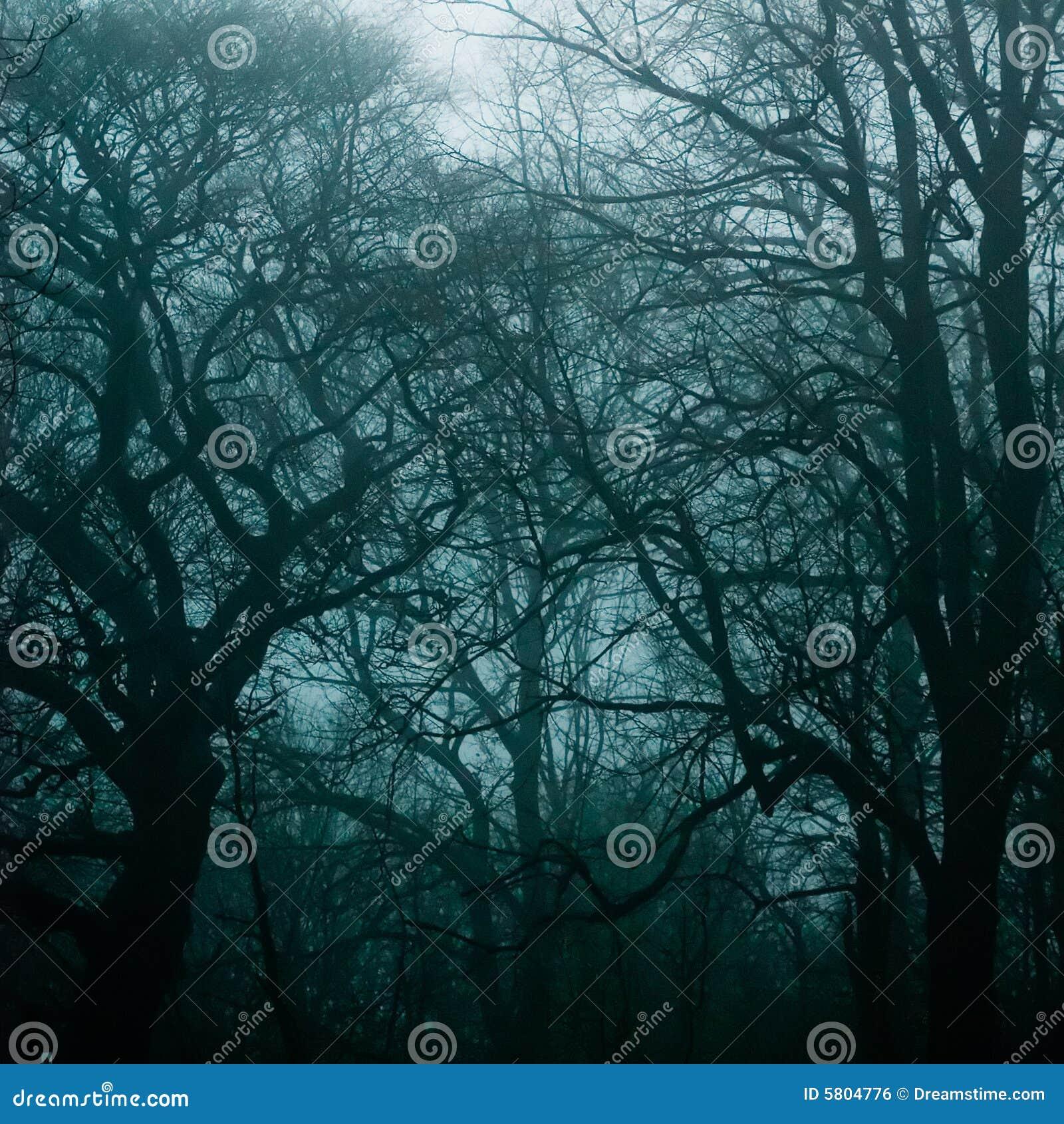 haunted woods stock photo image of darkness fairy