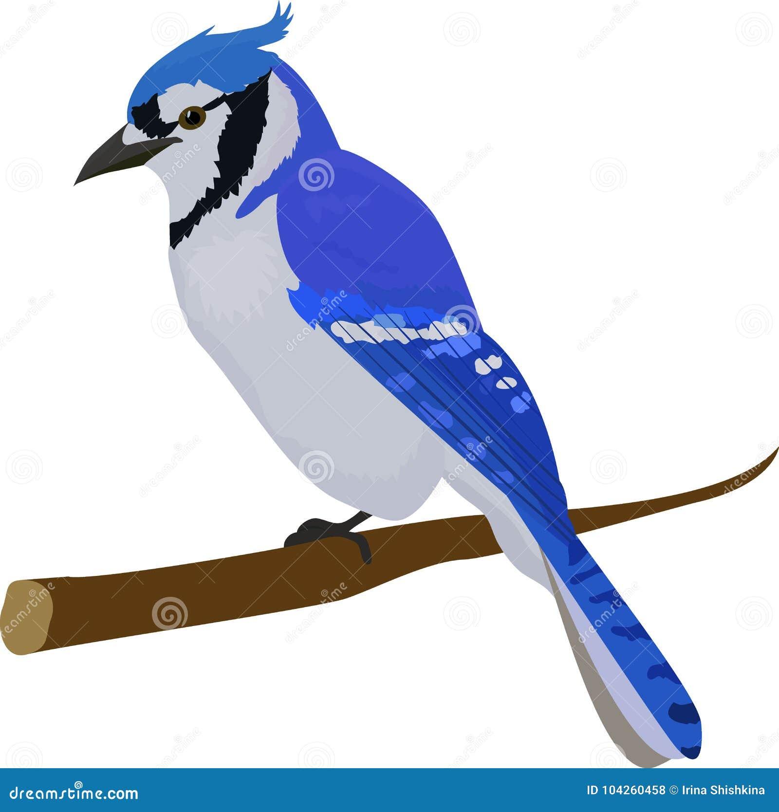 Hauptsächlicher Vogel Getrennt auf weißem Hintergrund
