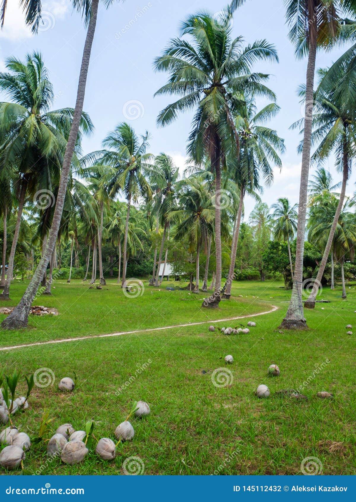 Haus tief in der Palmenwaldung