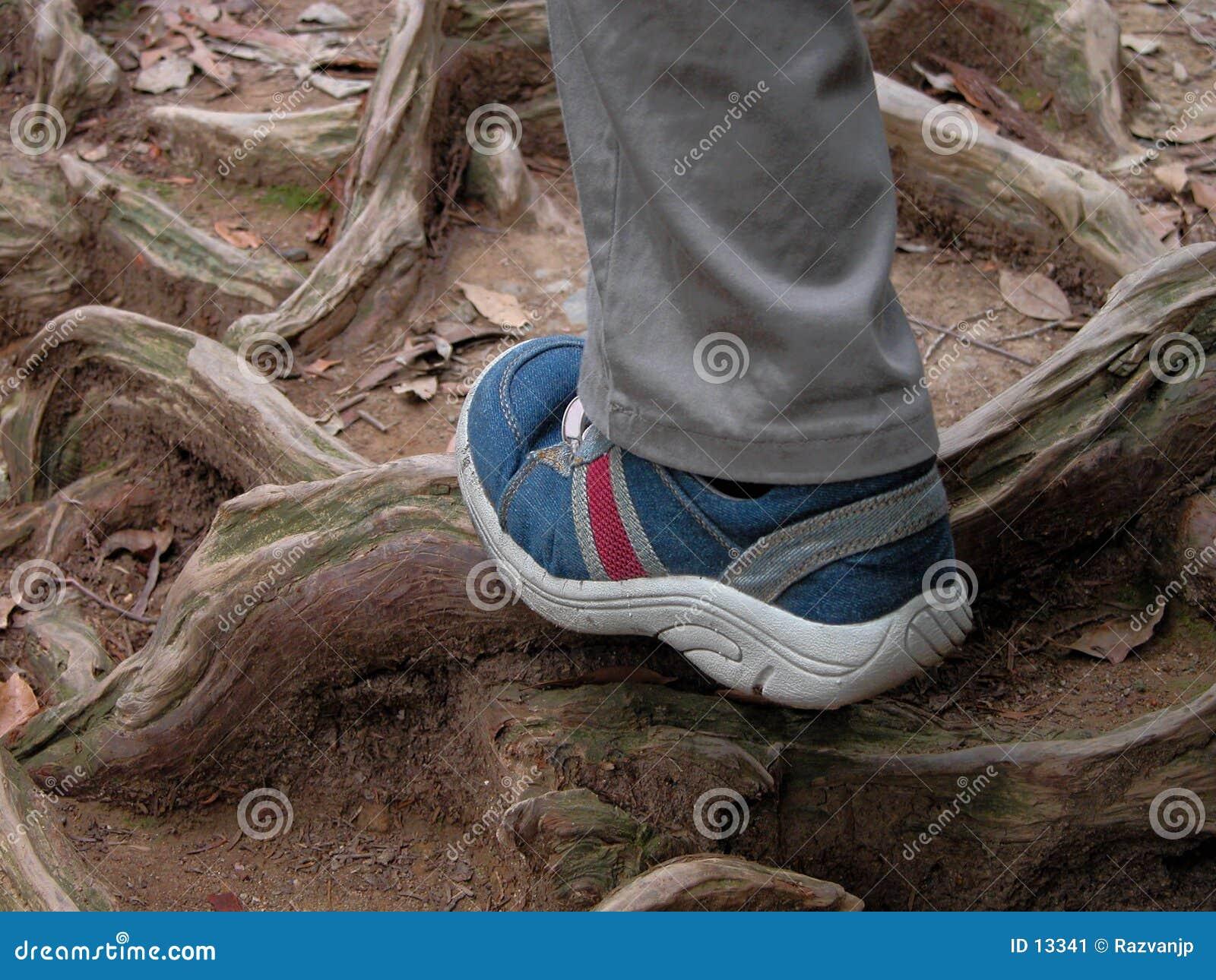 Hausse dans la forêt
