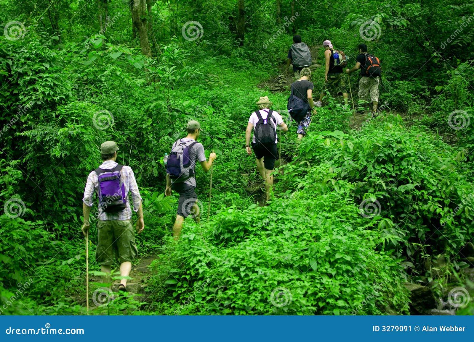 Hausse de jungle
