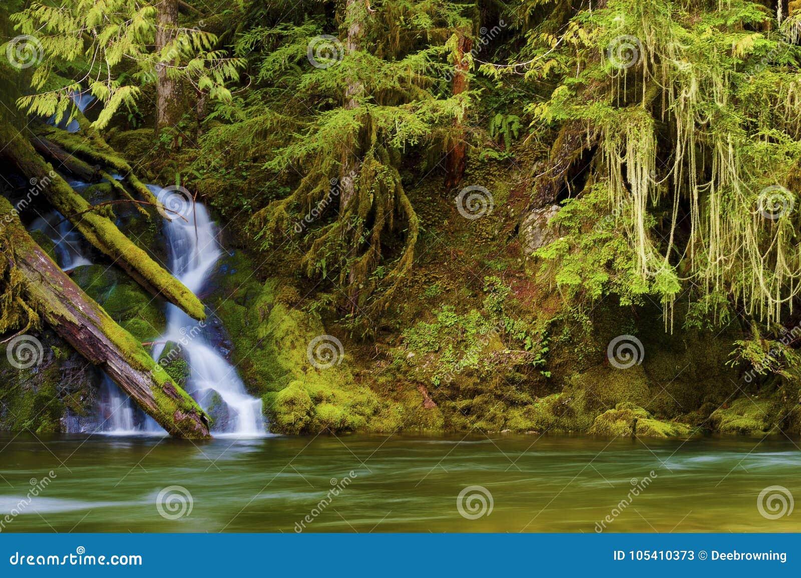 Hausse le long de Salmon River Mt Hood National Forest
