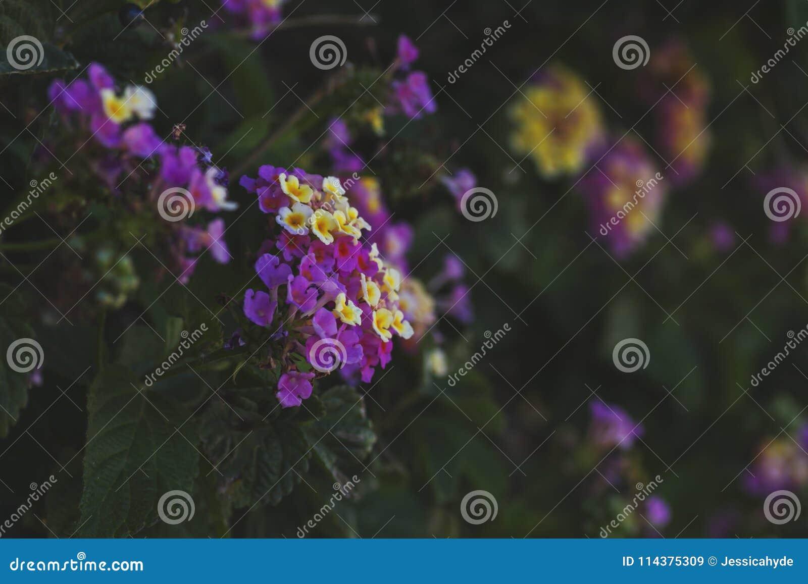 Haut étroit de fleurs thickberry
