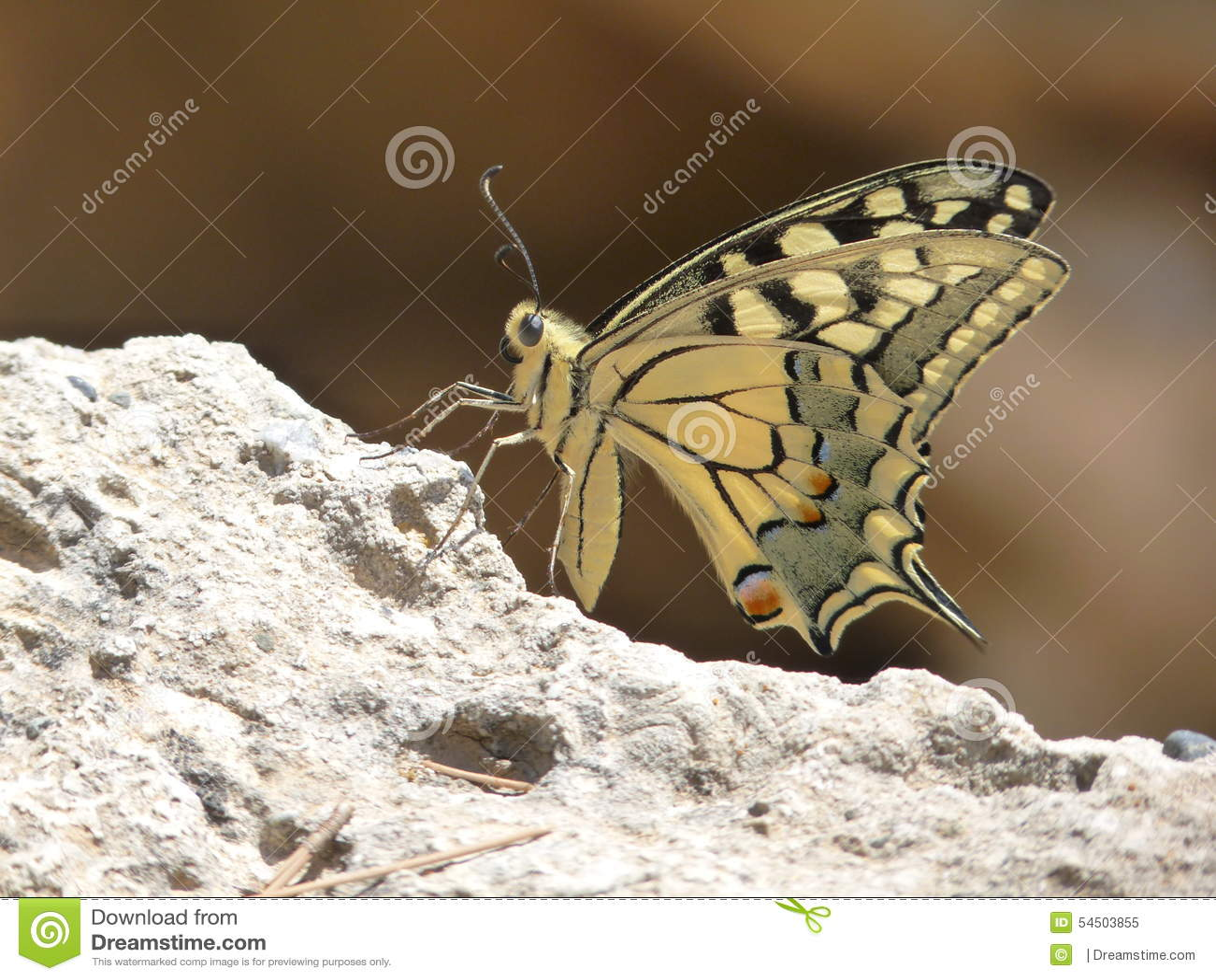 Haut étroit de papillon
