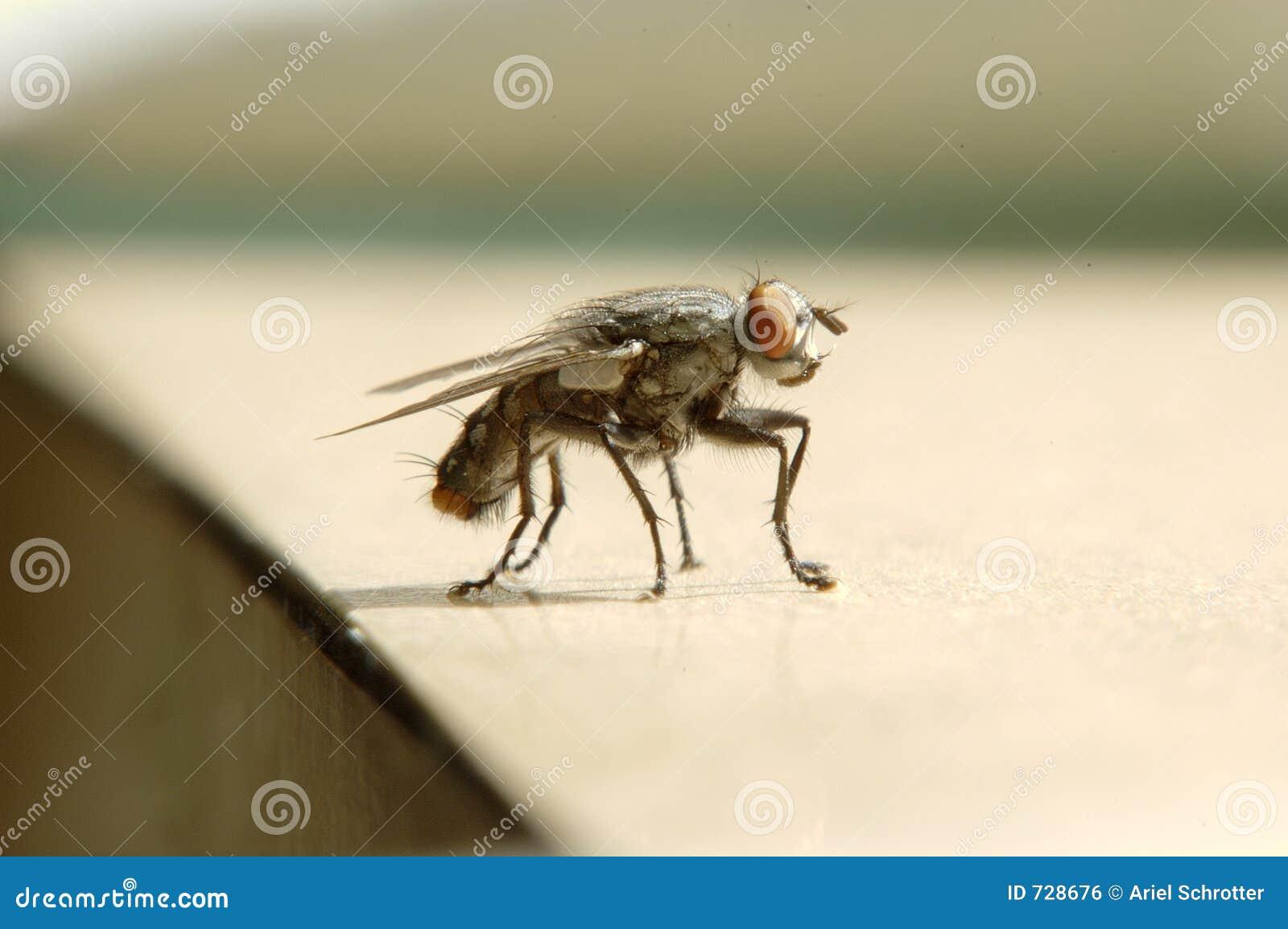 Haut proche de mouche