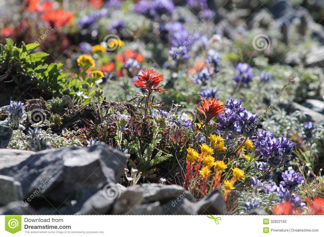 Hauts Wildflowers alpins