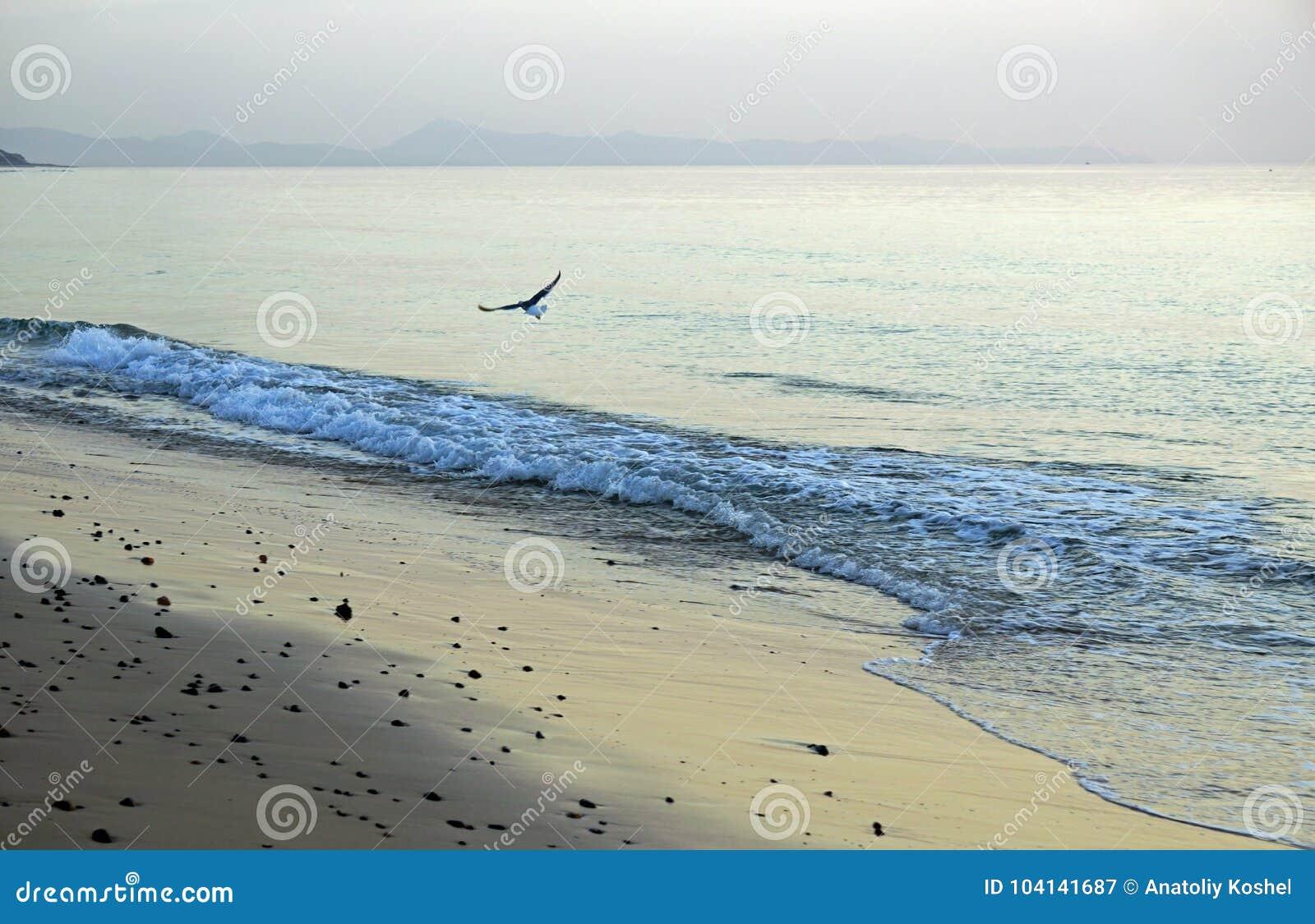 Hav Rinnande bränning vinkar på stranden Tidigt på morgonen några minuter för soluppgång