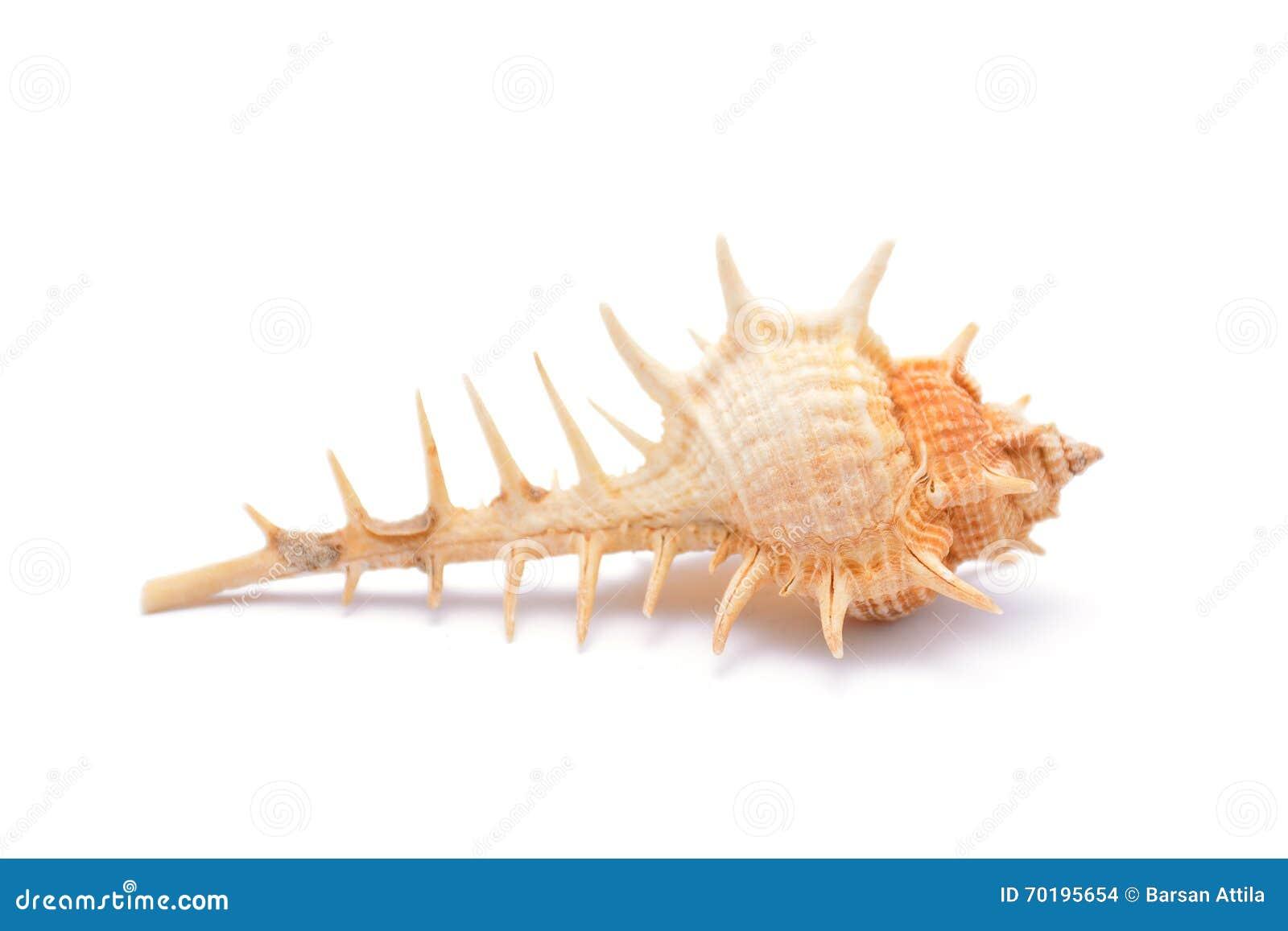 Hav Shell på vit