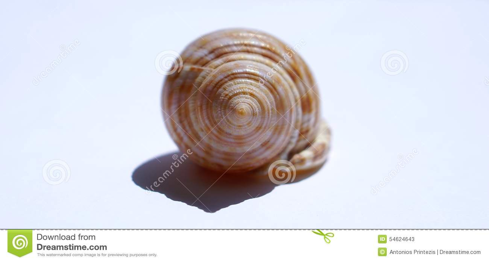 Hav-SHELL på vit bakgrund