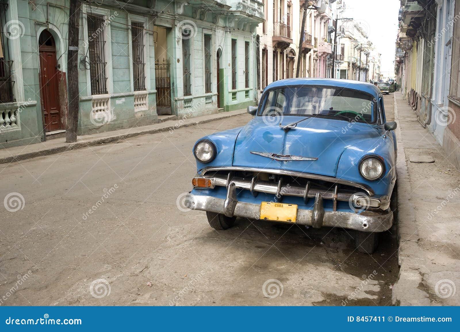 Havana gator