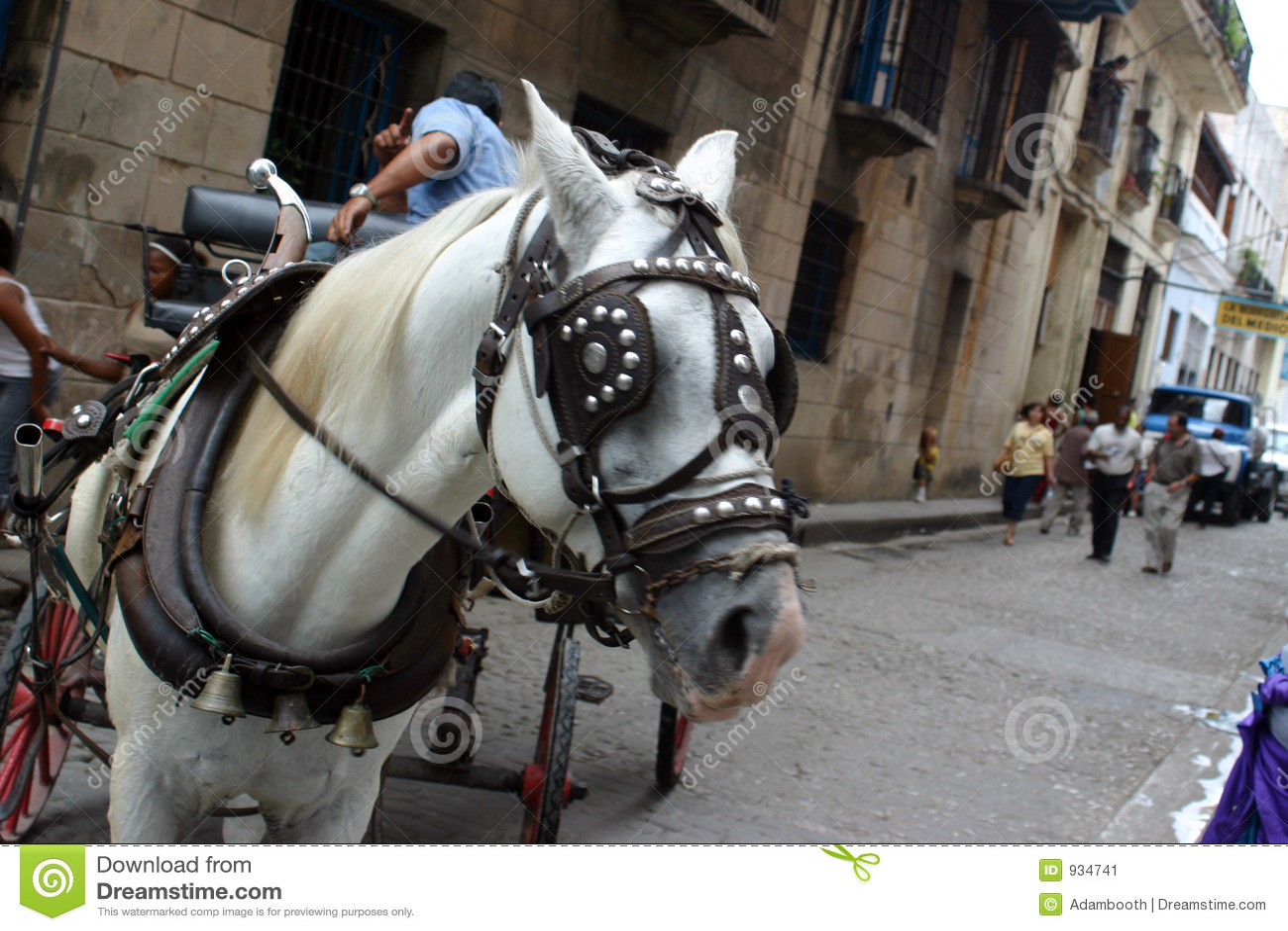 Havana-Pferd