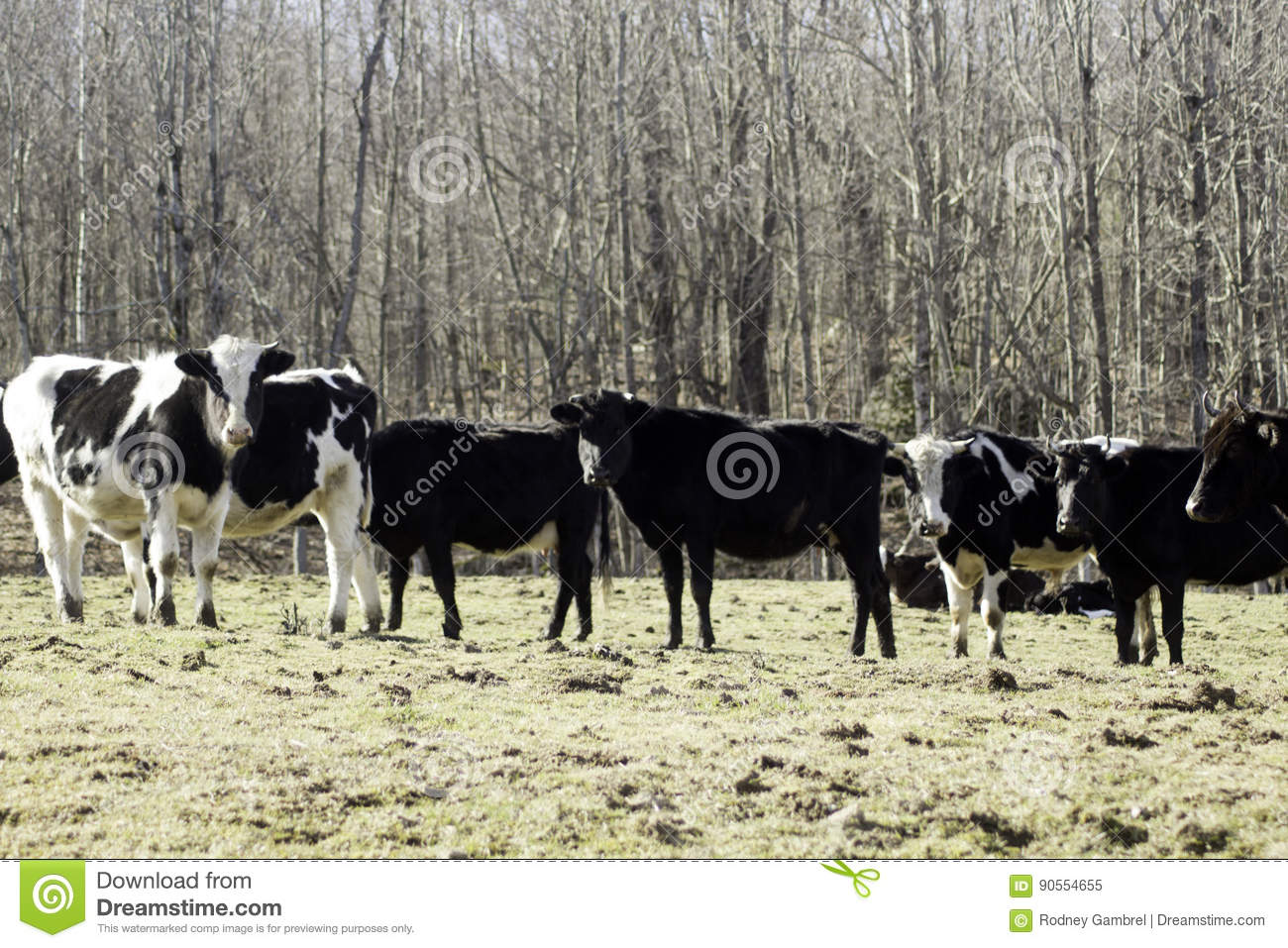 Have You Herd