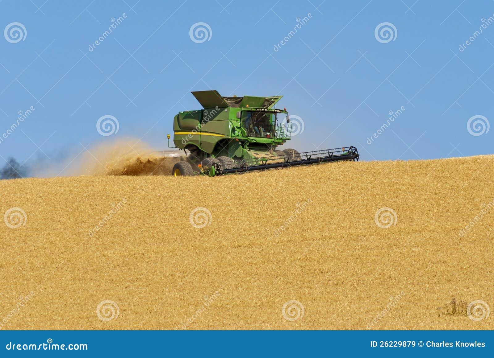 Havesting vete för Combine i ett fält