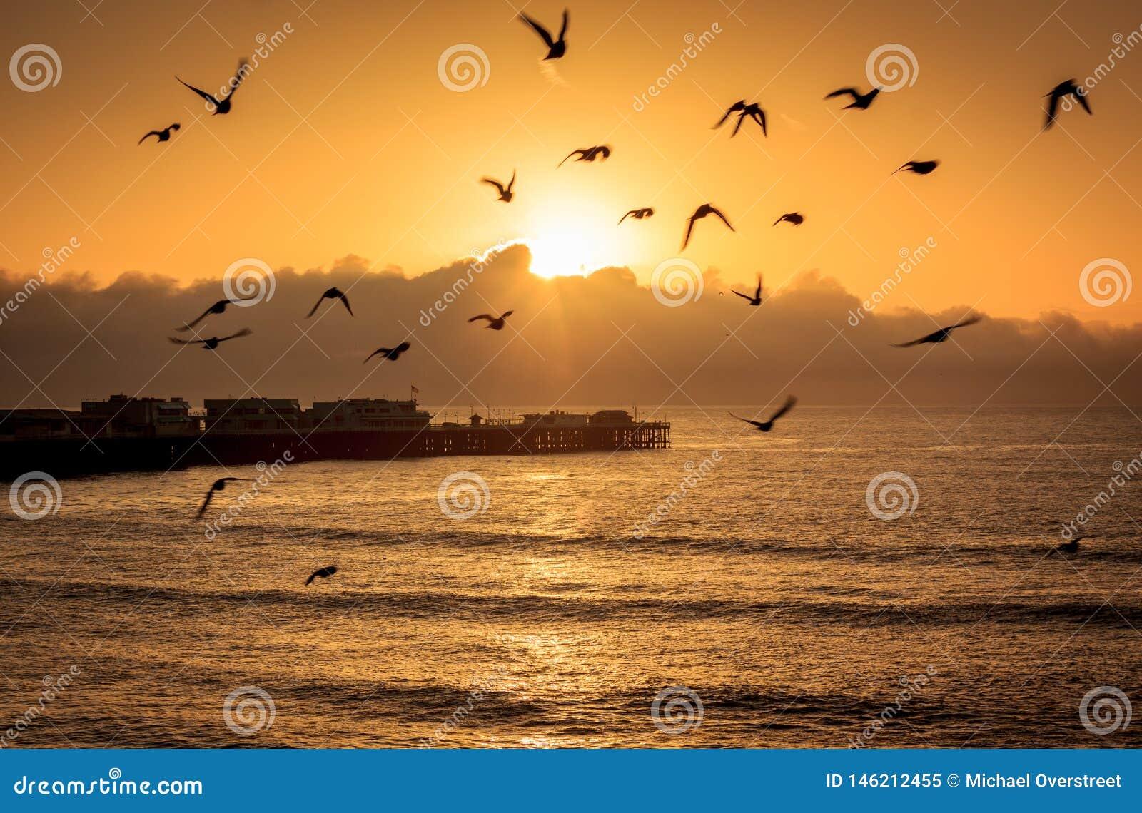 Havfåglar på gryning
