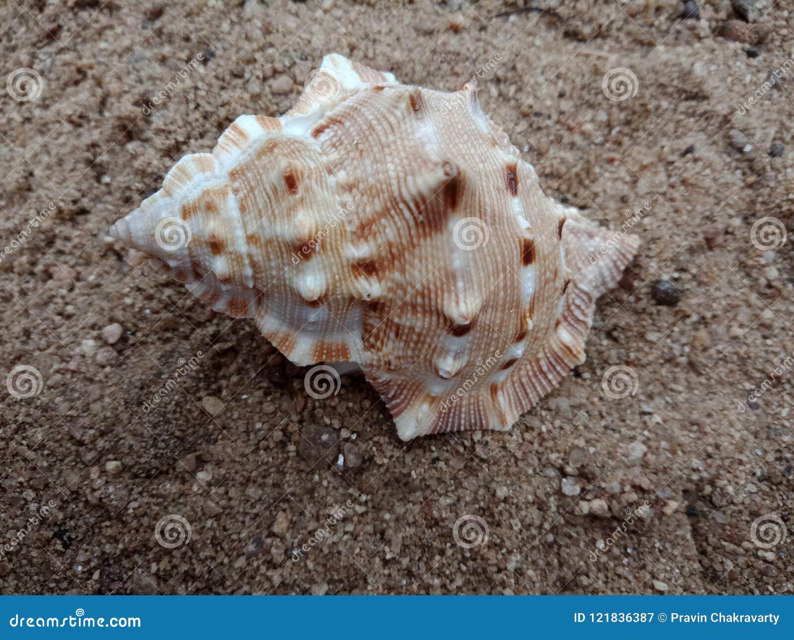 Havsskal på den sand texturerade bakgrundstapeten,