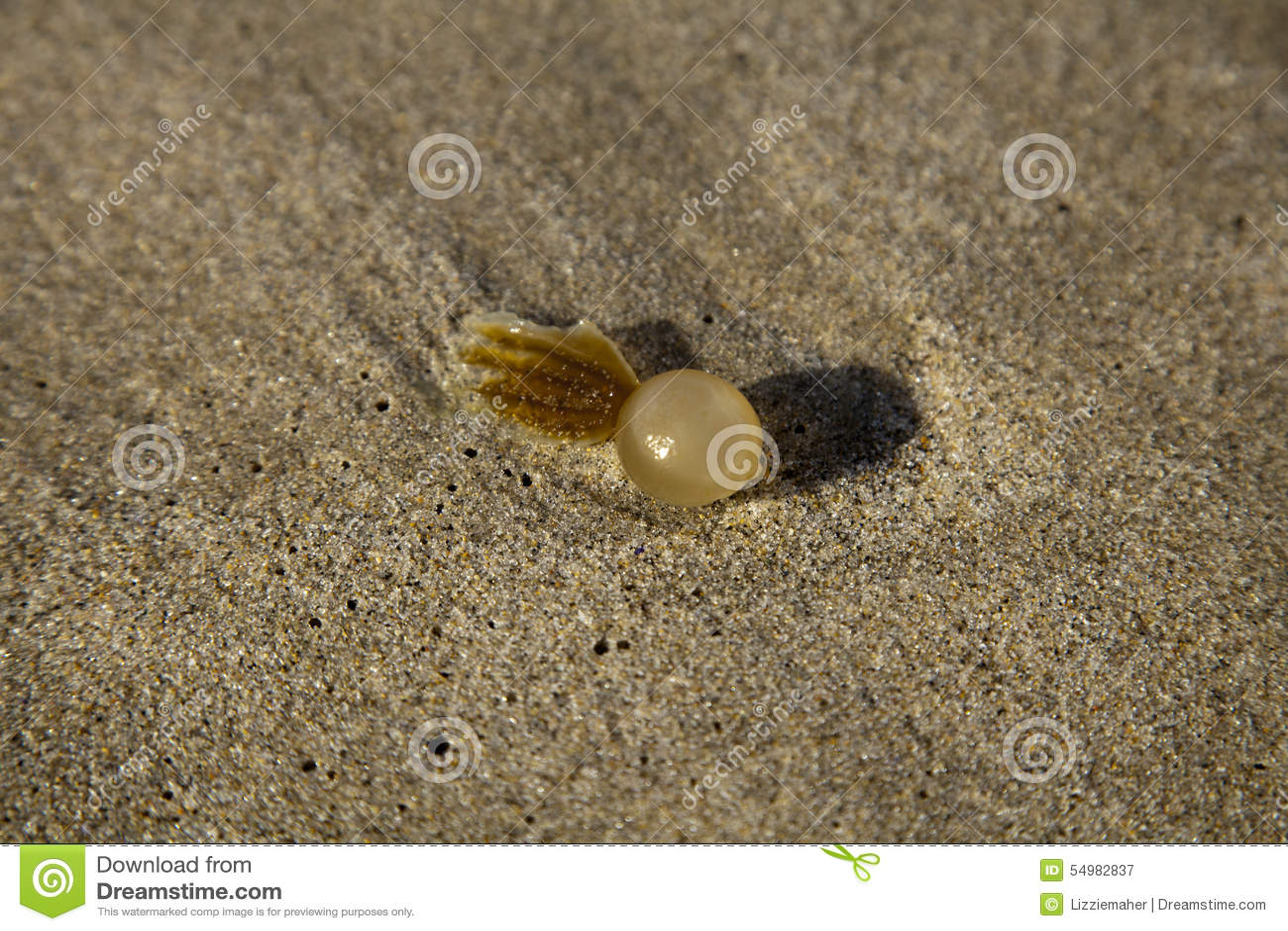 Havsväxt i sanden