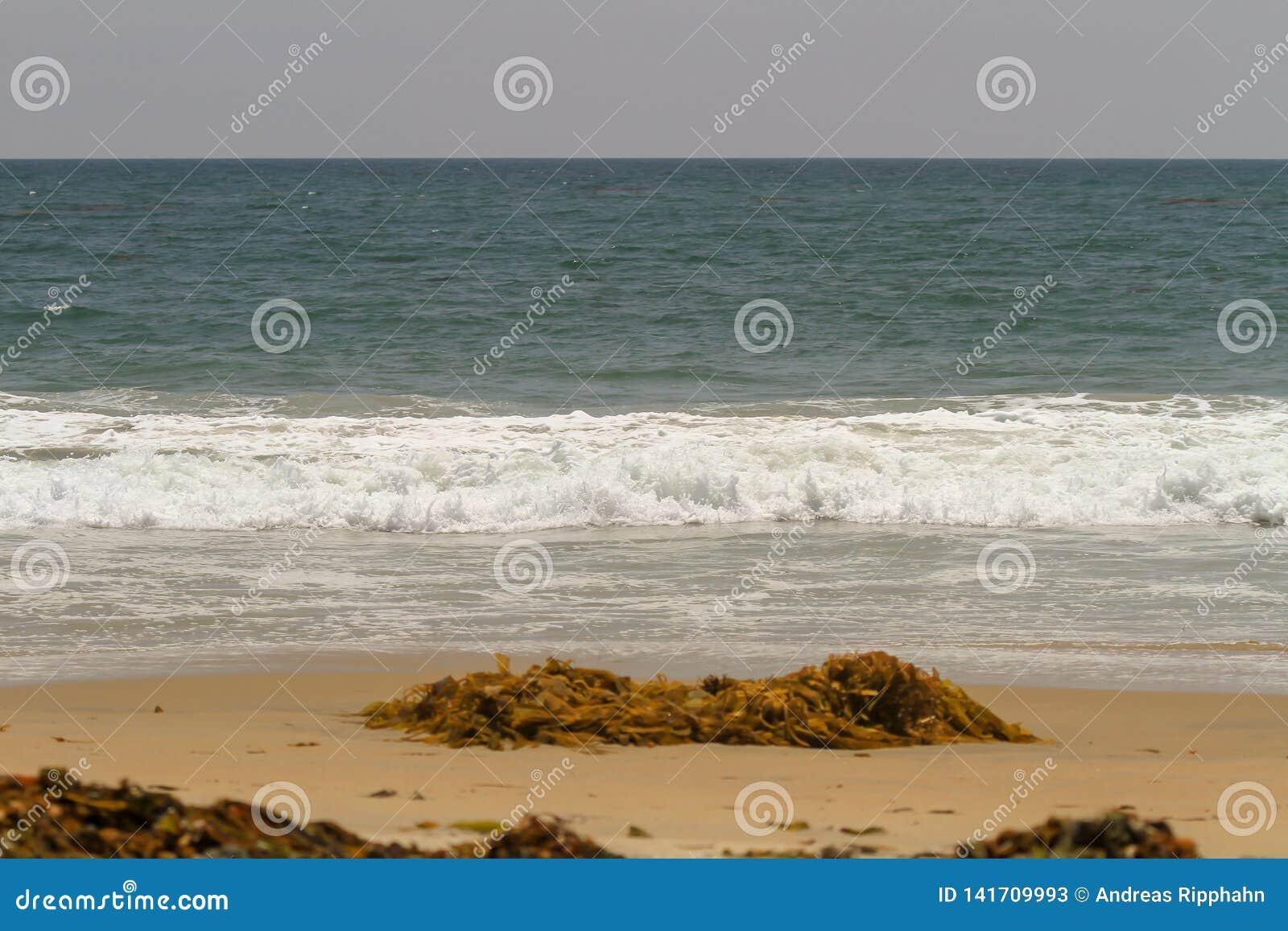 Havsväxt och vrakgods som tvättas upp på en sandig strand