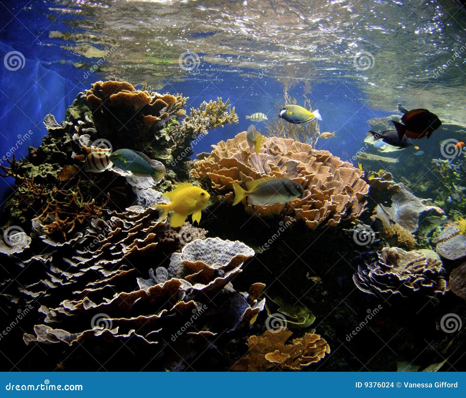 Hawaii Coral Reef Stock Photo. Image Of Animal, Marine