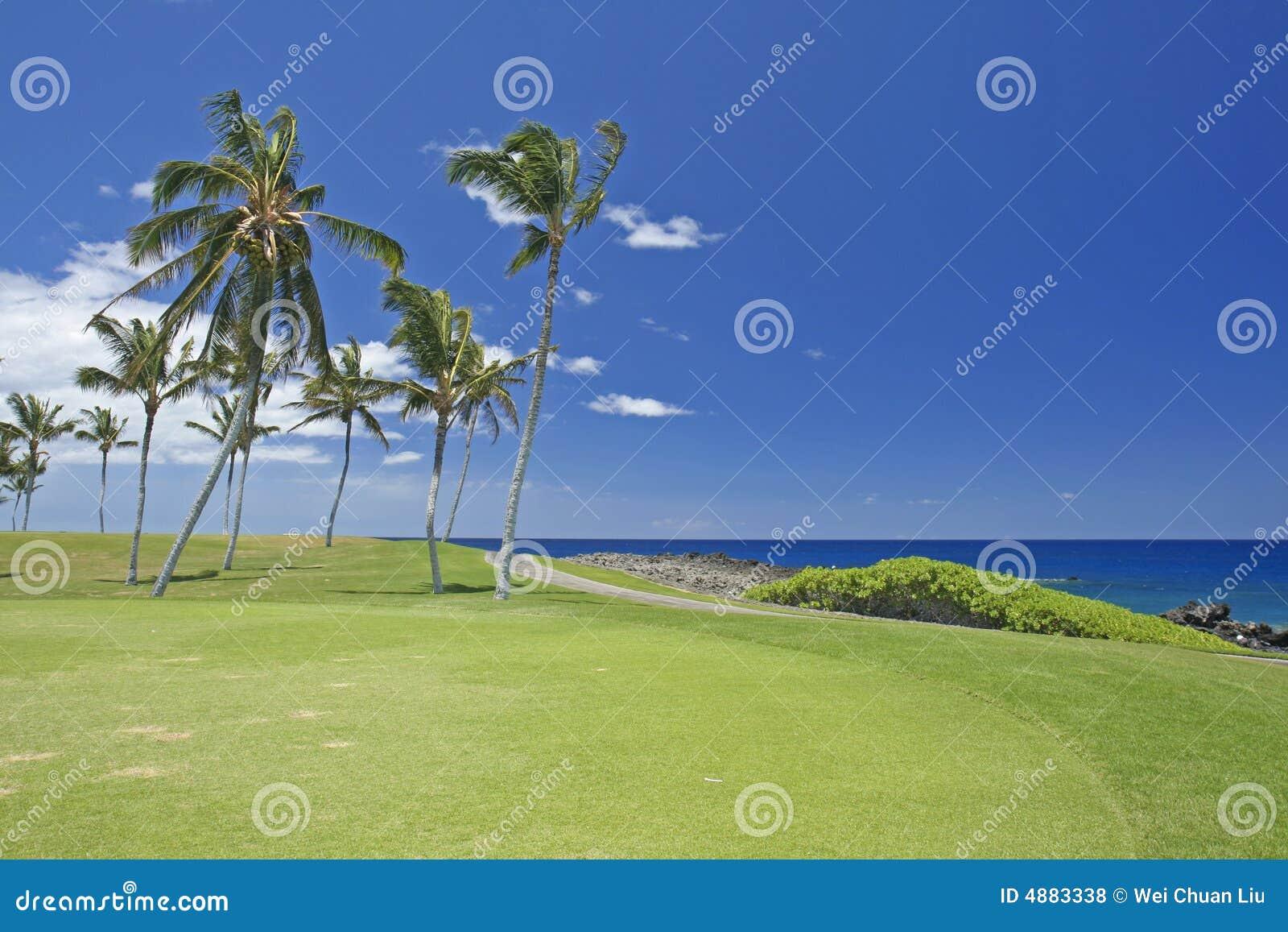 Hawaii kurs golfa,