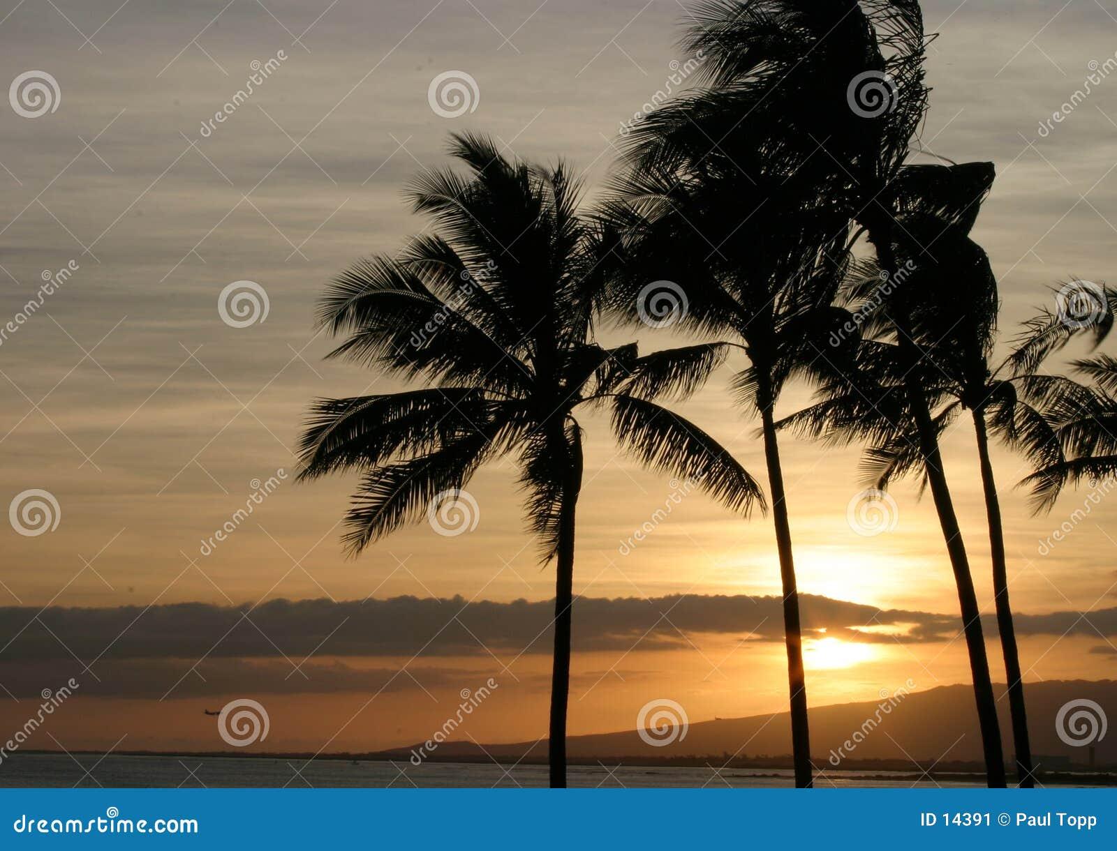 Hawaii sunset palmowi nieba oceanicznego drzewa