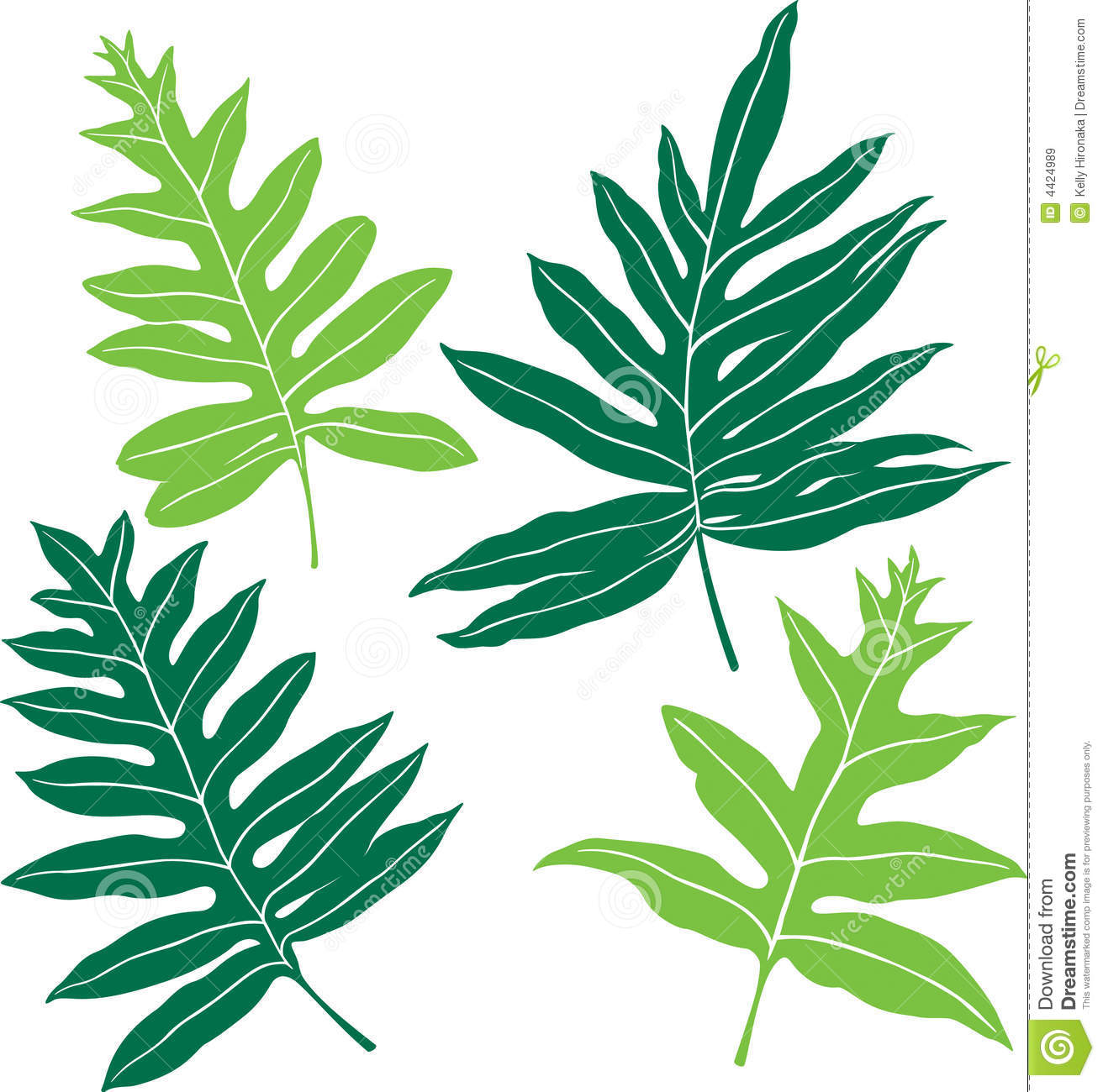 Illustration of 4 different fronds of the hawaiian lauae fern