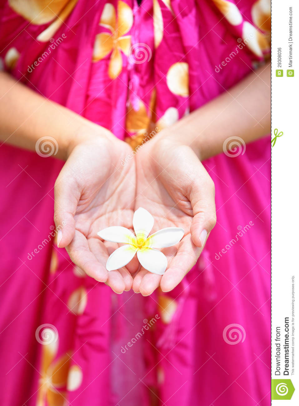 Hawaiian flower in cupped hands stock photo image of hand female hawaiian flower in cupped hands izmirmasajfo Gallery