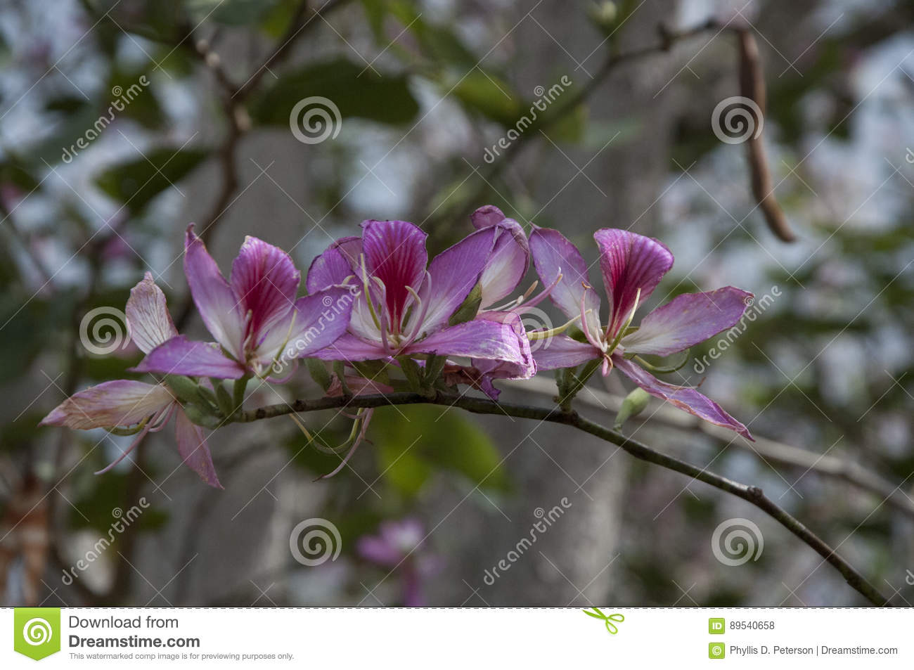 Hawaiian flowers growing on tree limb hawaii usa stock photo download hawaiian flowers growing on tree limb hawaii usa stock photo image of izmirmasajfo