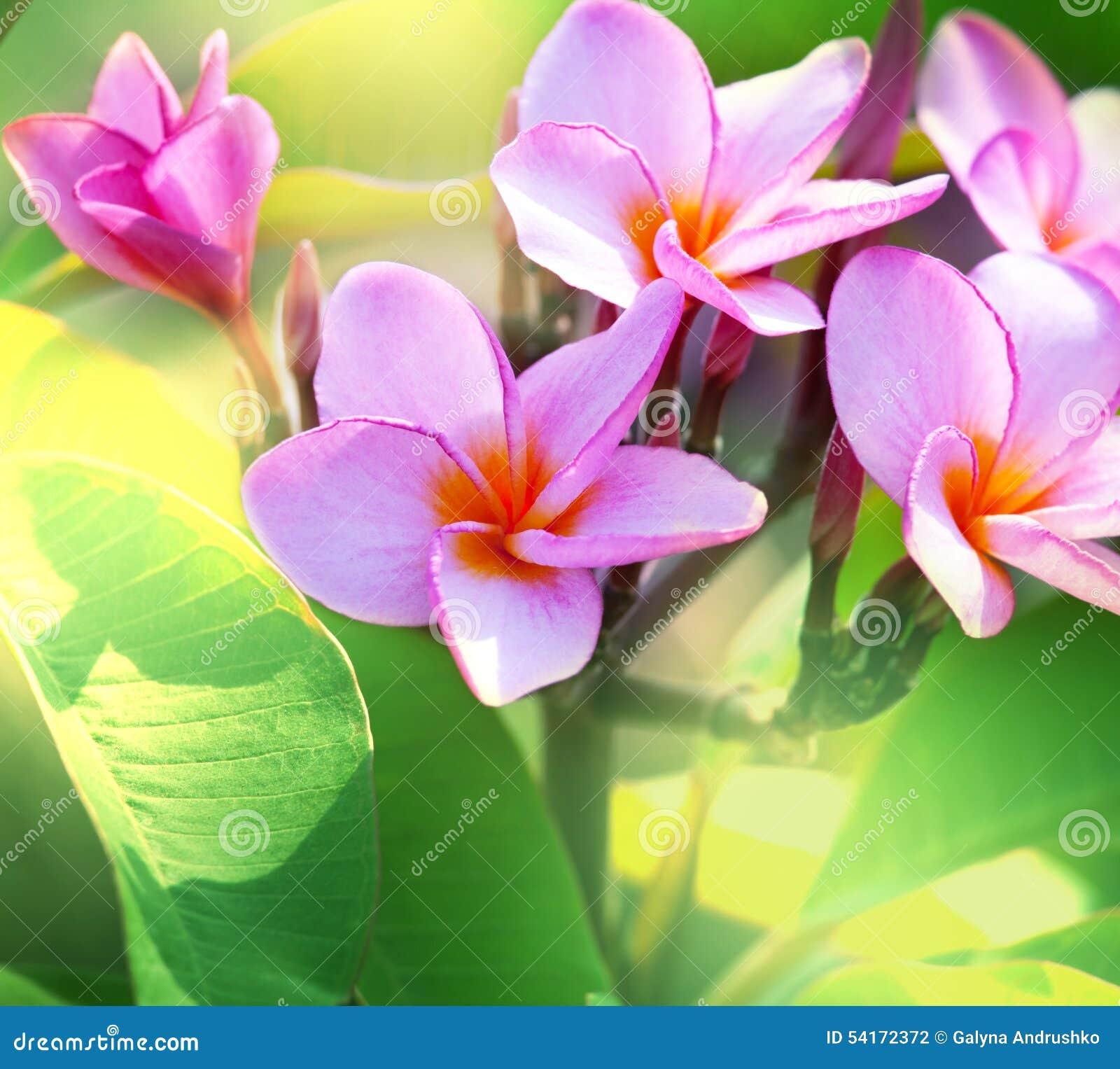Hawaiian Flowers Stock Photo Image Of Pink Hawaii Flora 54172372