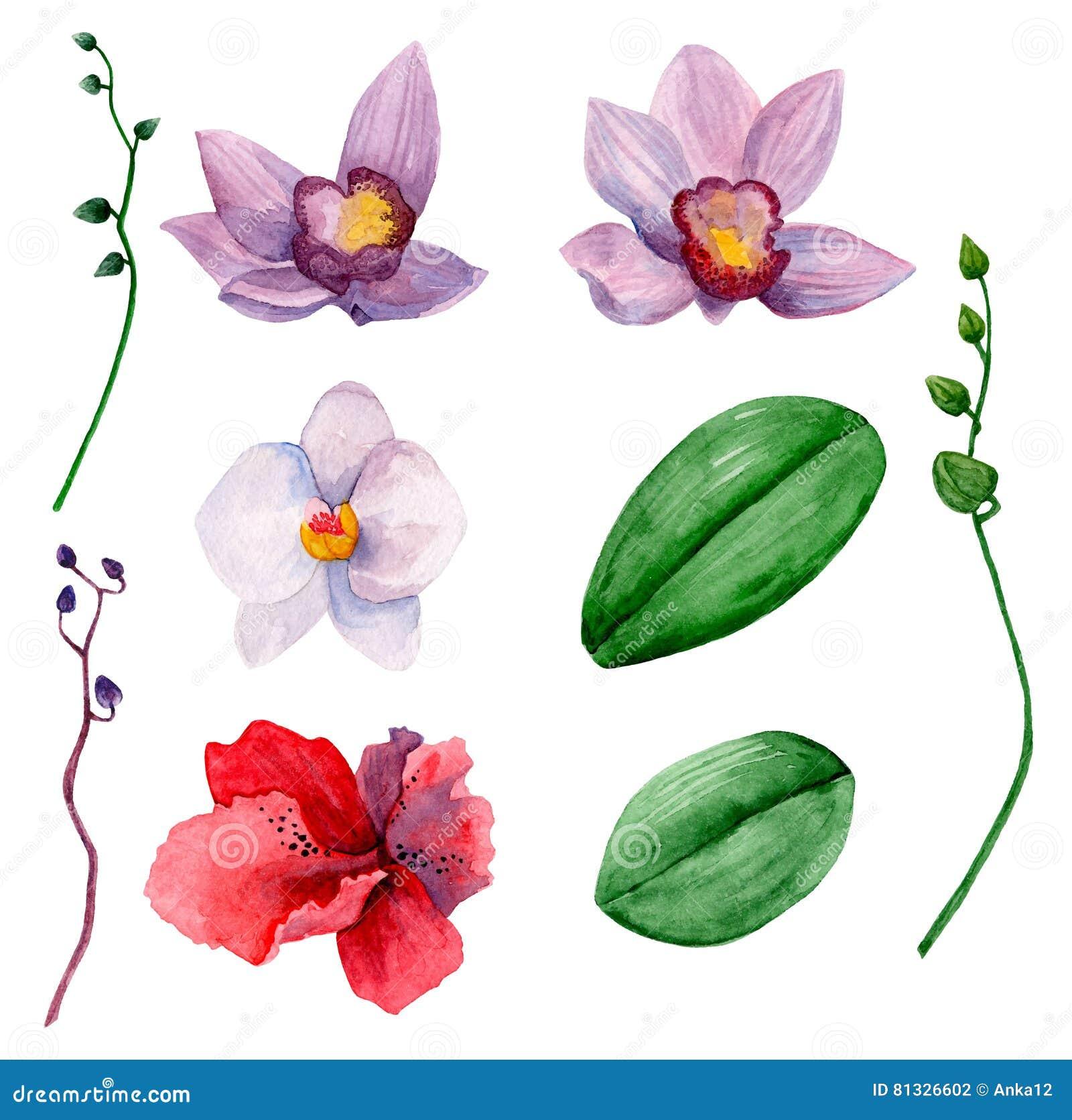 Hawaiian flowers vector clipart stock vector illustration of hawaiian flowers vector clipart izmirmasajfo