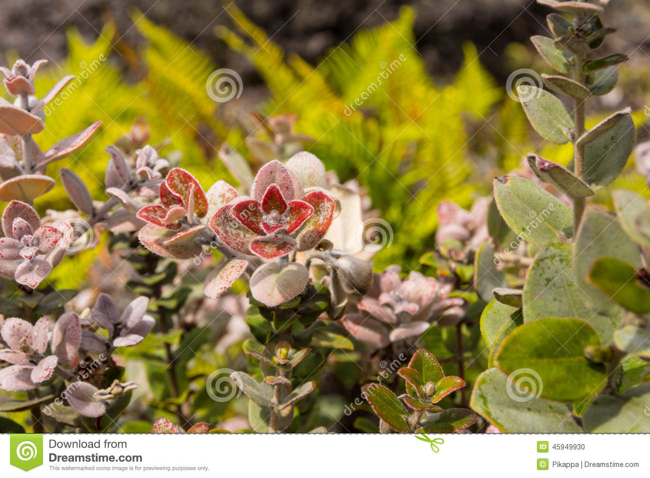 The hawaiian flowers stock photo image of plant foliage 45949930 download the hawaiian flowers stock photo image of plant foliage 45949930 izmirmasajfo