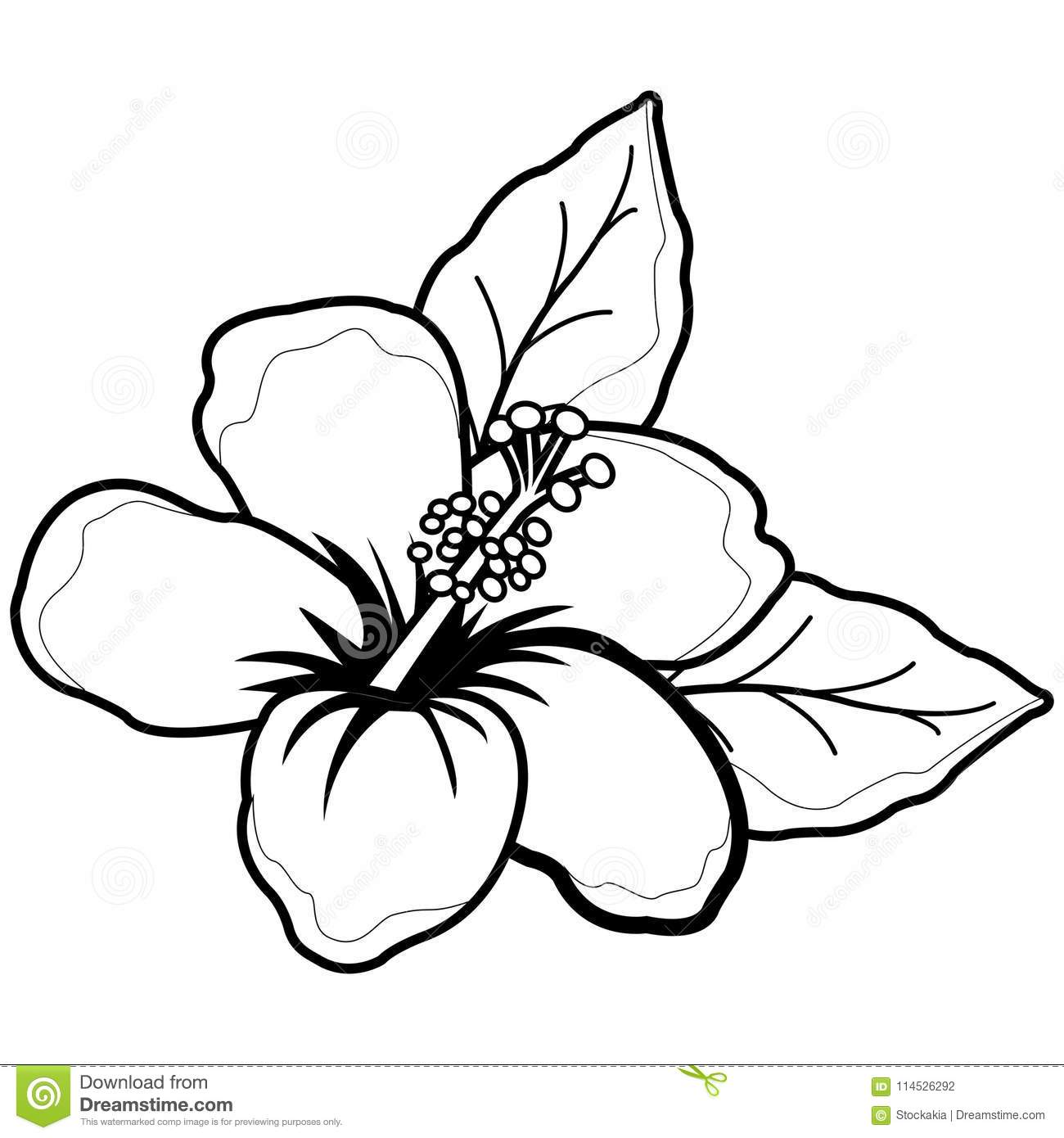 Hawaiian Hibiscus Flower Black And White Coloring Book Page Stock