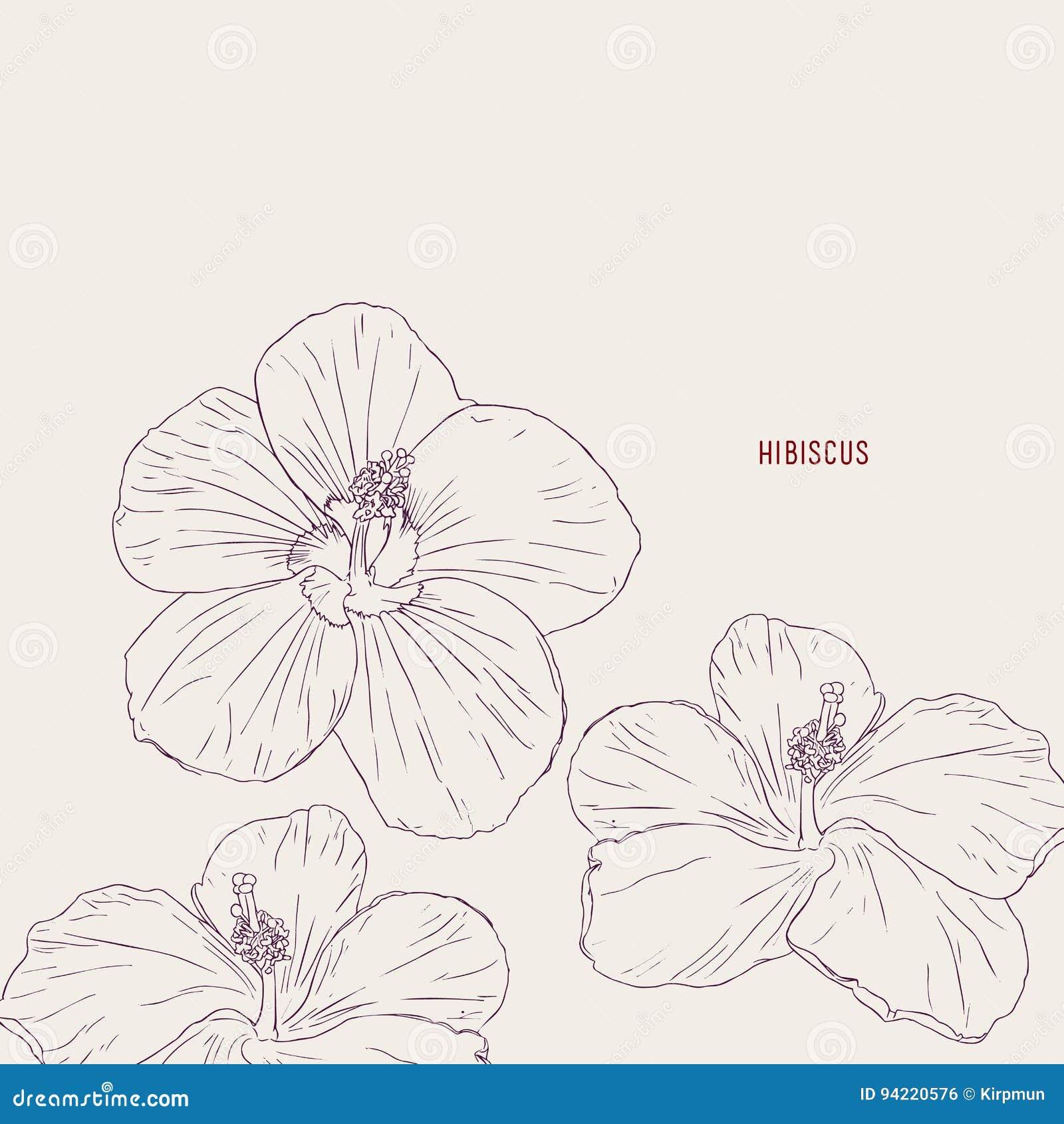 Hawaiian Hibiscus Flowers Sketch Vector Stock Vector